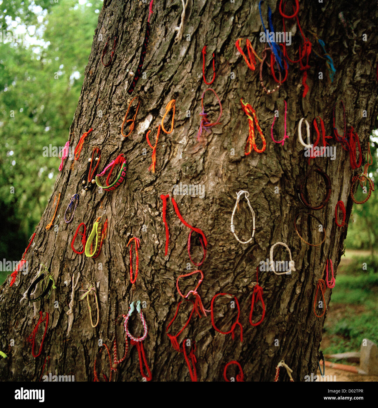 trees can kill as well the Herbicides can kill trees, and, properly applied, they can be safe for the environment (2018, february 18) 8 ways to safely and effectively kill a tree.
