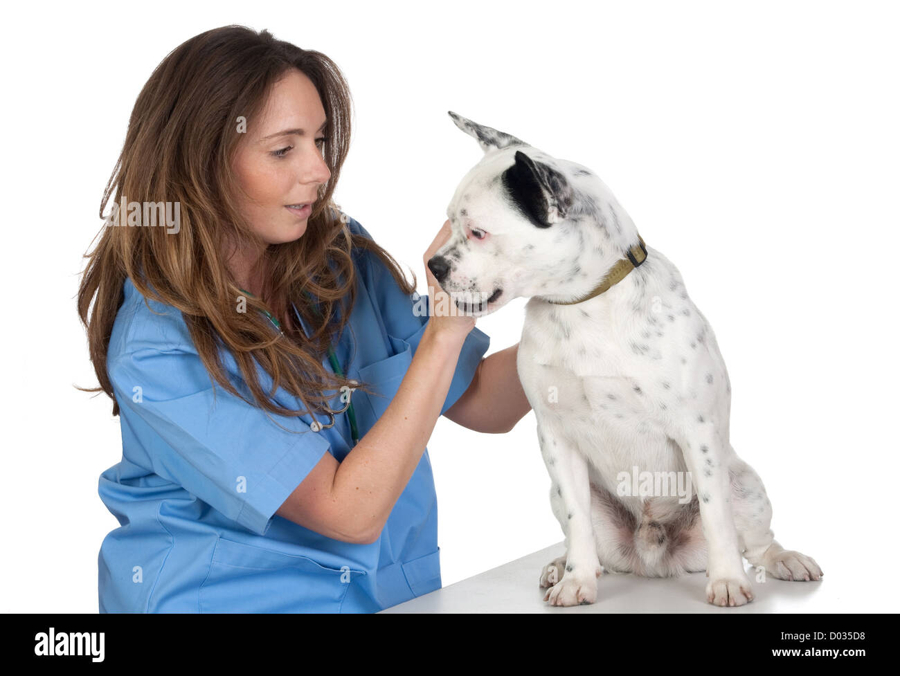 Veterinary with a dog for a review isolated on white background - Stock Image