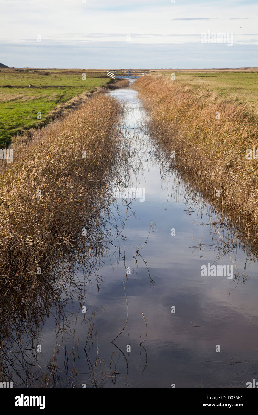 Channel Drainage For Patios: Marsh With Drainage Channel Stock Photos & Marsh With