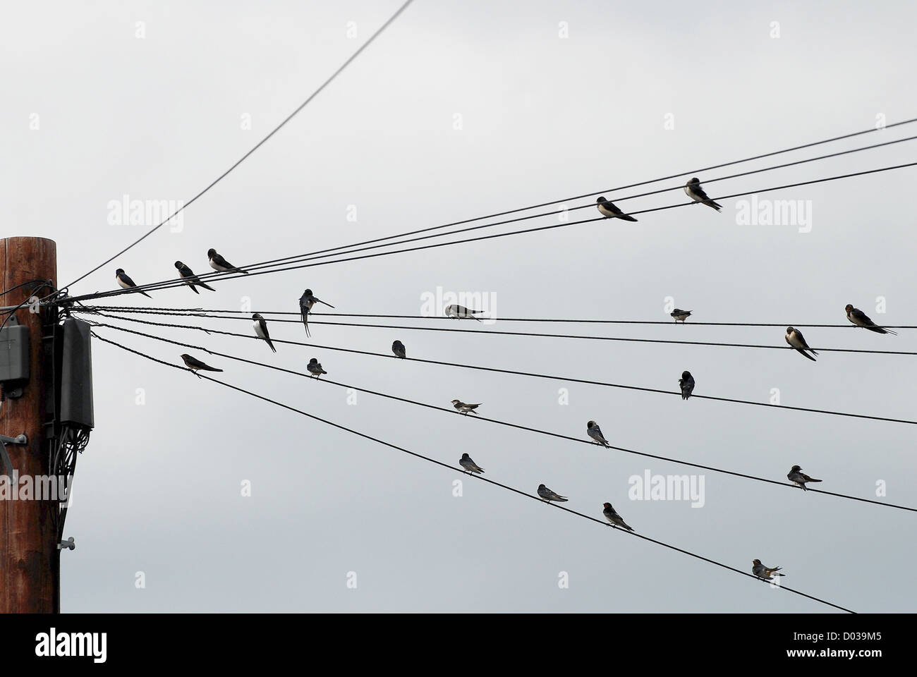 Telegraph Pole Wires Bird Stock Photos & Telegraph Pole Wires Bird ...