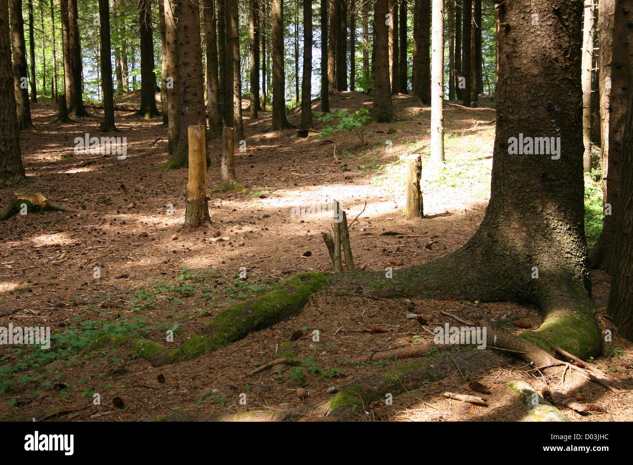 Sunlight and shaddow in the deep forrest. - Stock Image