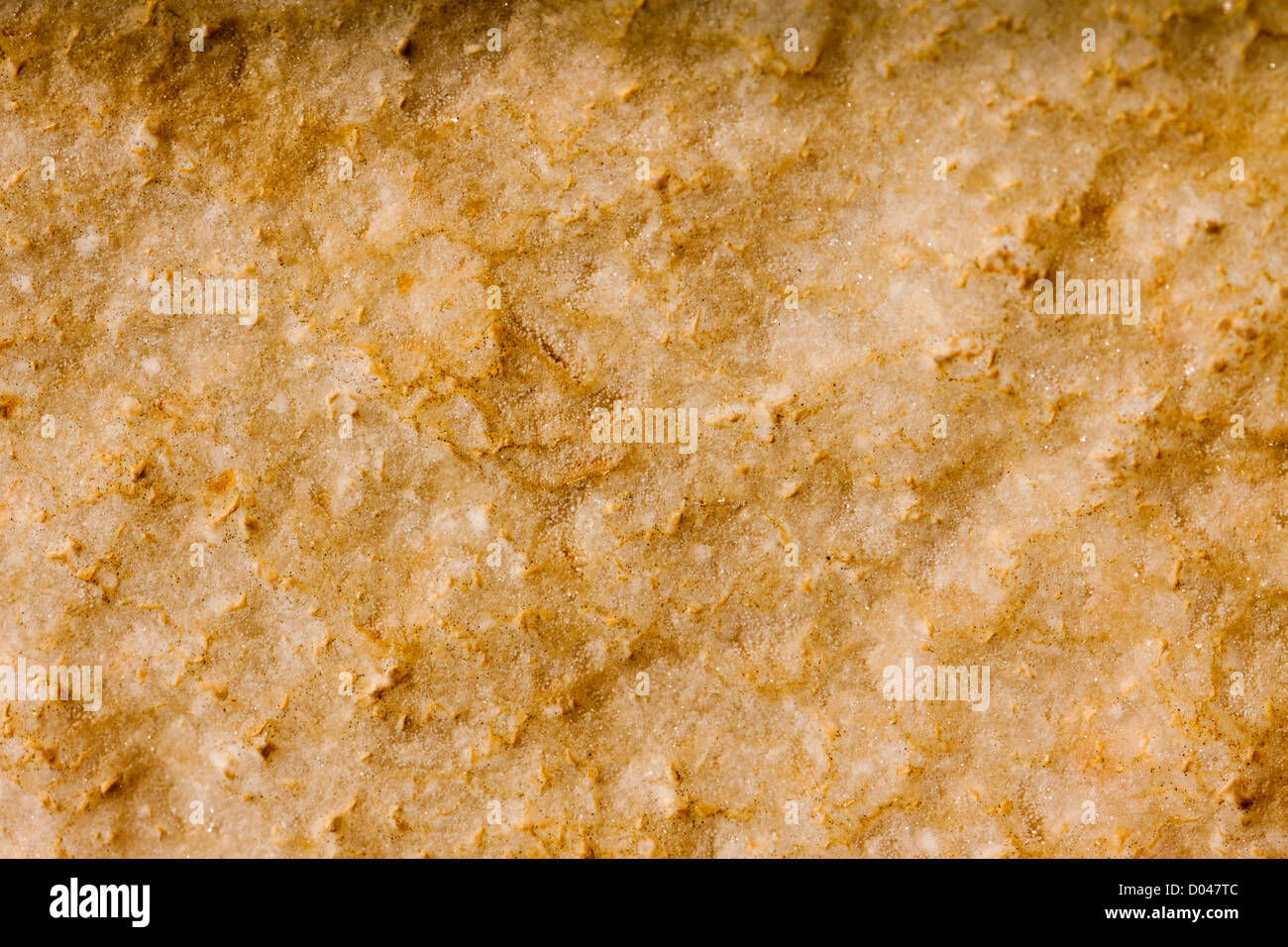 Closeup of a dark limestone rock. Perfect as an earthy background or texture. - Stock Image
