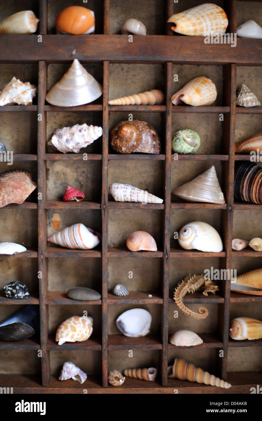 Shell Collection - Stock Image