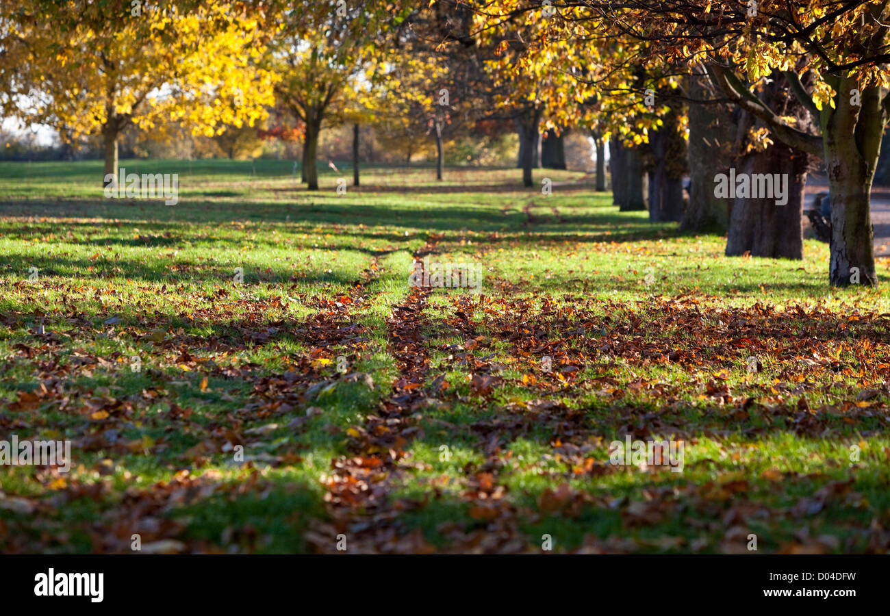 Tire tracks on a field of grass covered with fallen autumn leaves, Regent's Park, London, England, UK - Stock Image