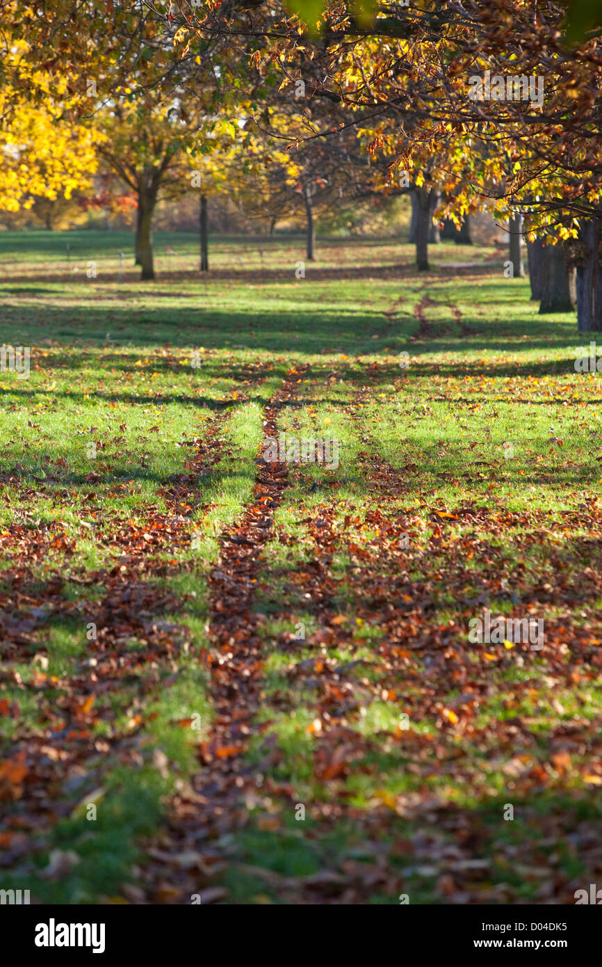 Field covered with grass and fallen autumn leaves, and long tire tracks, Regent's Park, London, England, UK - Stock Image