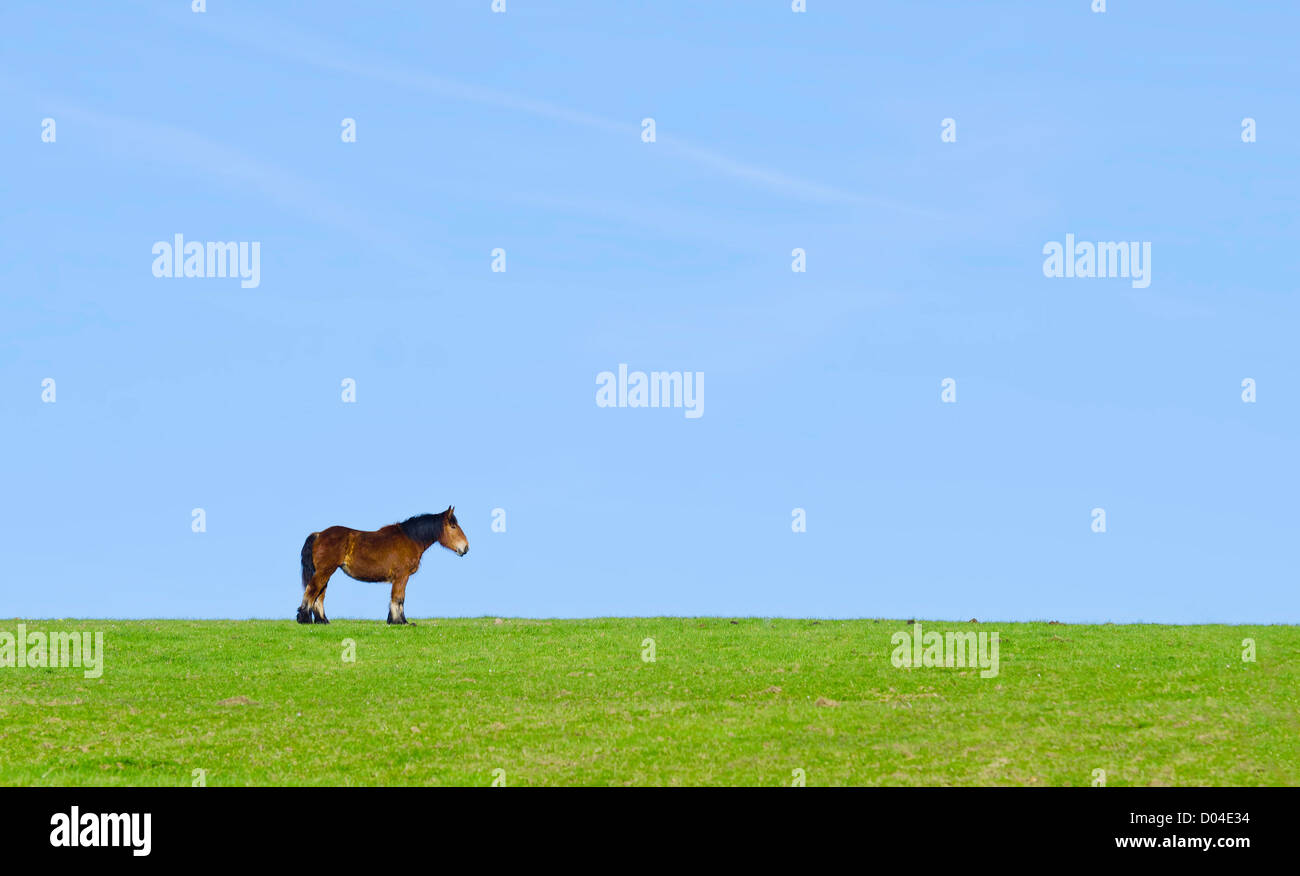 an isolated horse in a green meadow - Stock Image