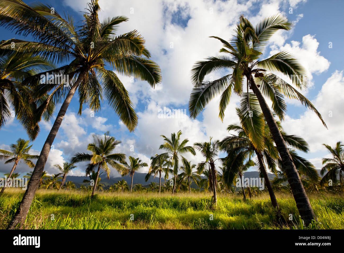 Palm-tree - Stock Image