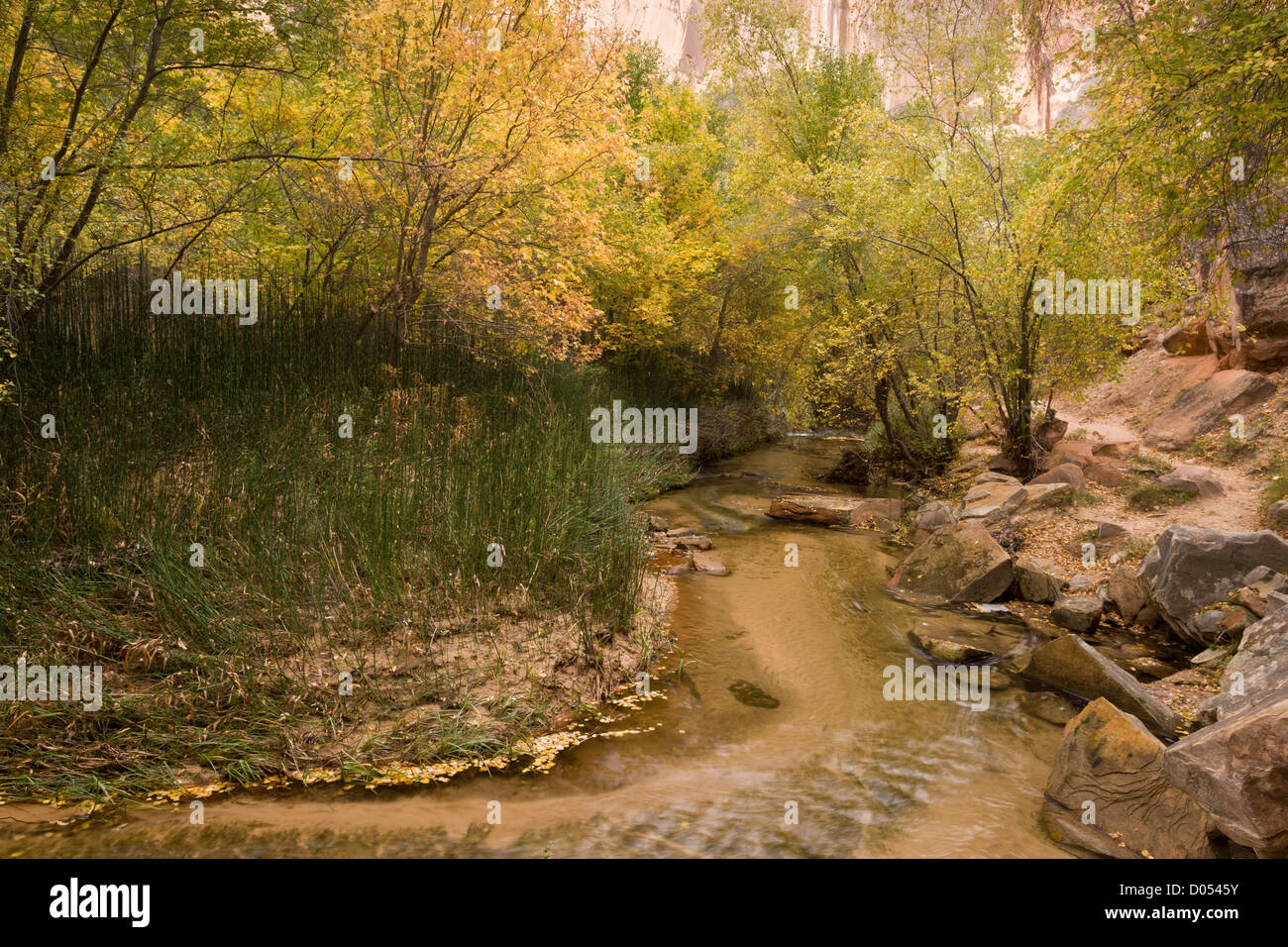 Calf Creek, Grand Staircase-Escalante National Monument; clean creek and unspoilt riparian vegetation, south Utah, - Stock Image