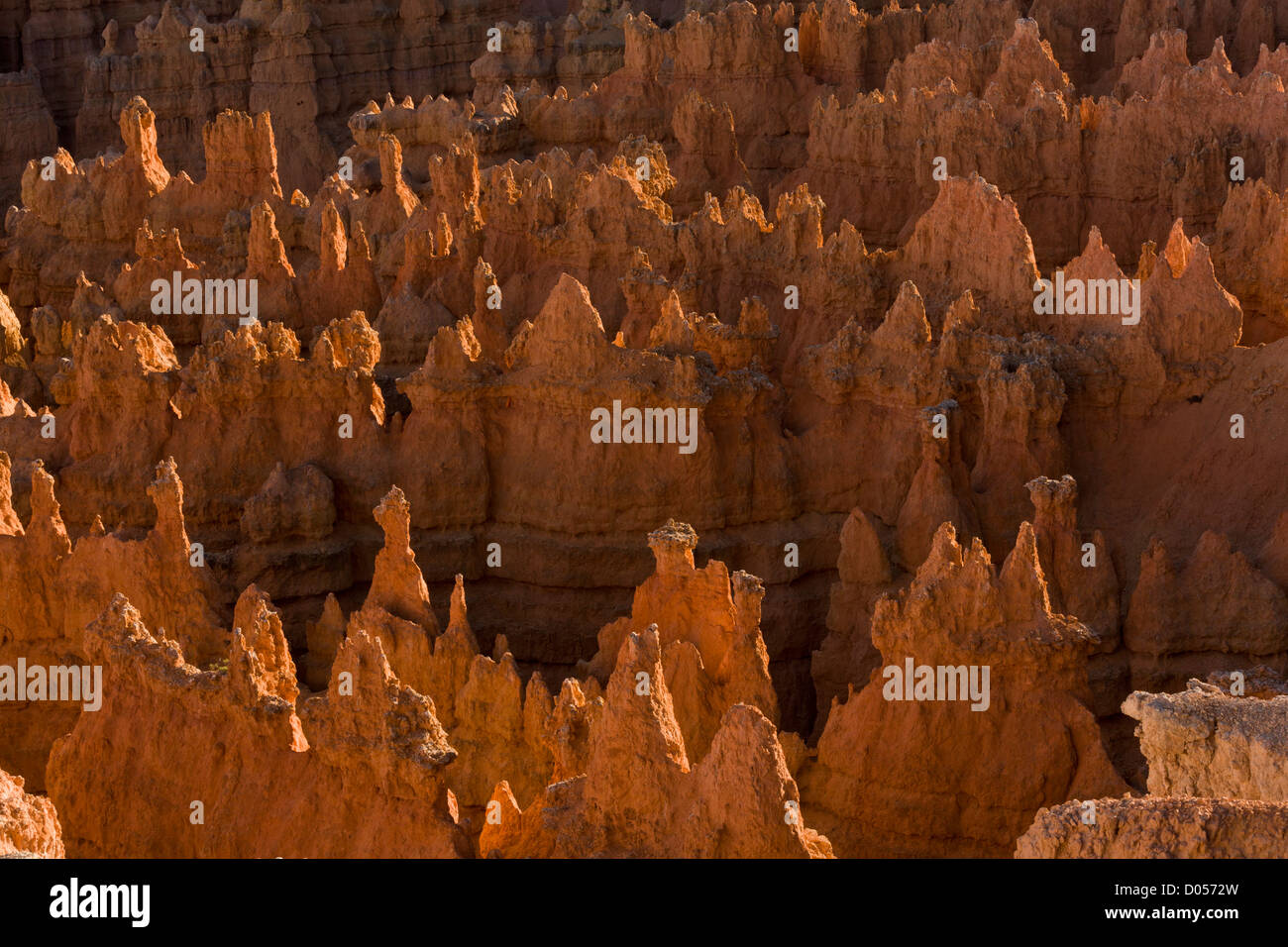 Hoodoos or Rock pillars from erosion in the limestones and other rocks of the Claron formation, Bryce Canyon National - Stock Image