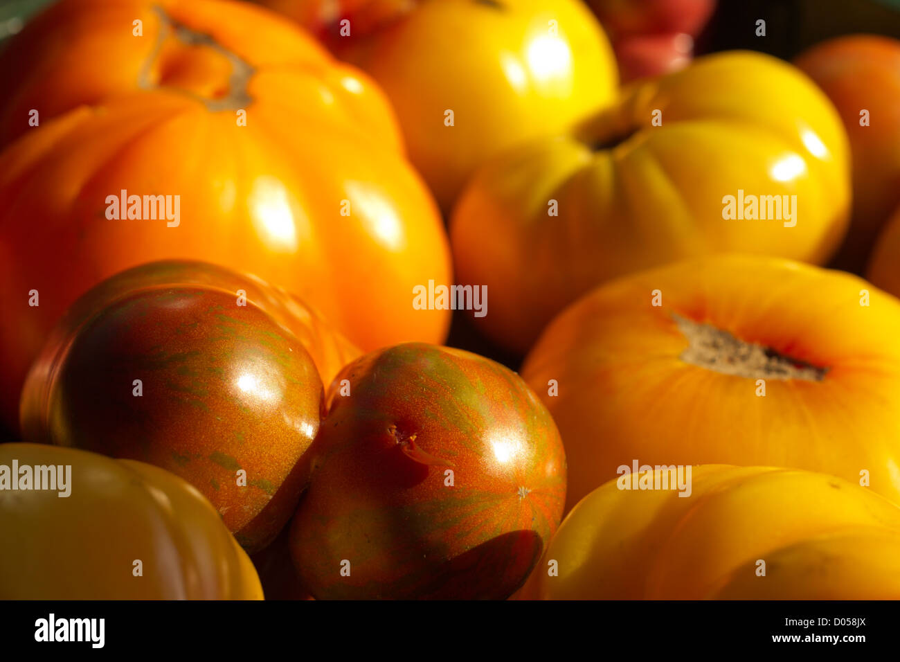 ripe heirloom tomatoes - Stock Image