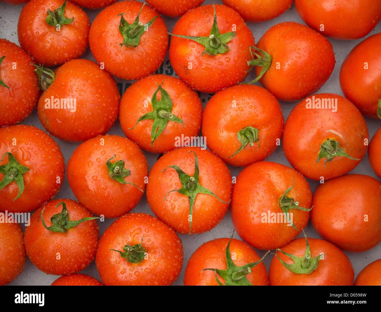 Heirloom Tomatoes - Stock Image