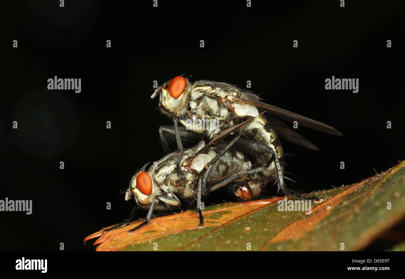 the intimate insects, make love,for new generation - Stock Image
