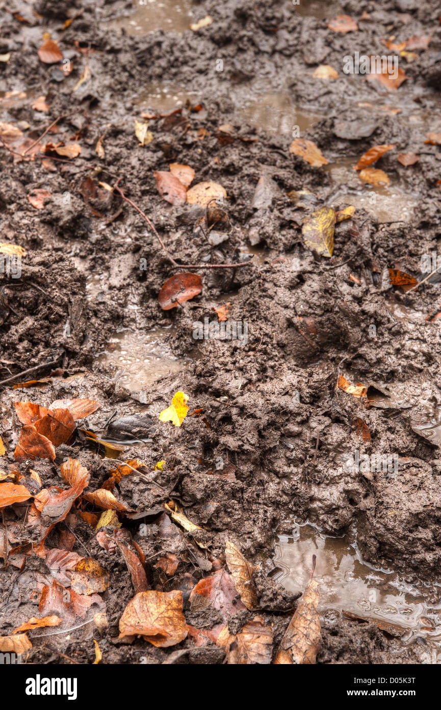 muddy squelchy sloppy trail created by horses through dense beech thicket footpath in mist and autumn colors Stock Photo
