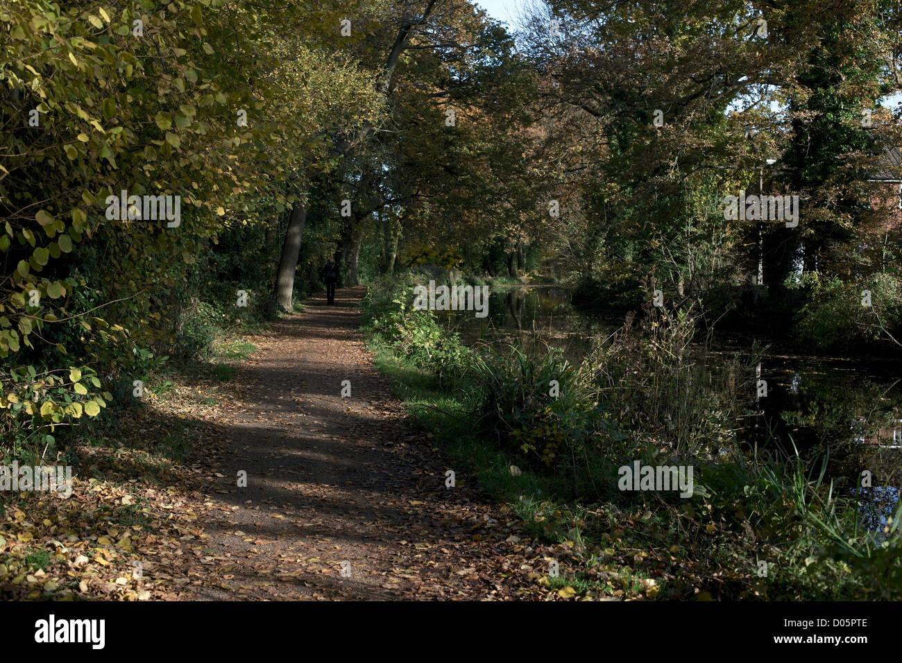 Towpath in autumn Basingstoke Canal Woking Surrey England sunlight - Stock Image
