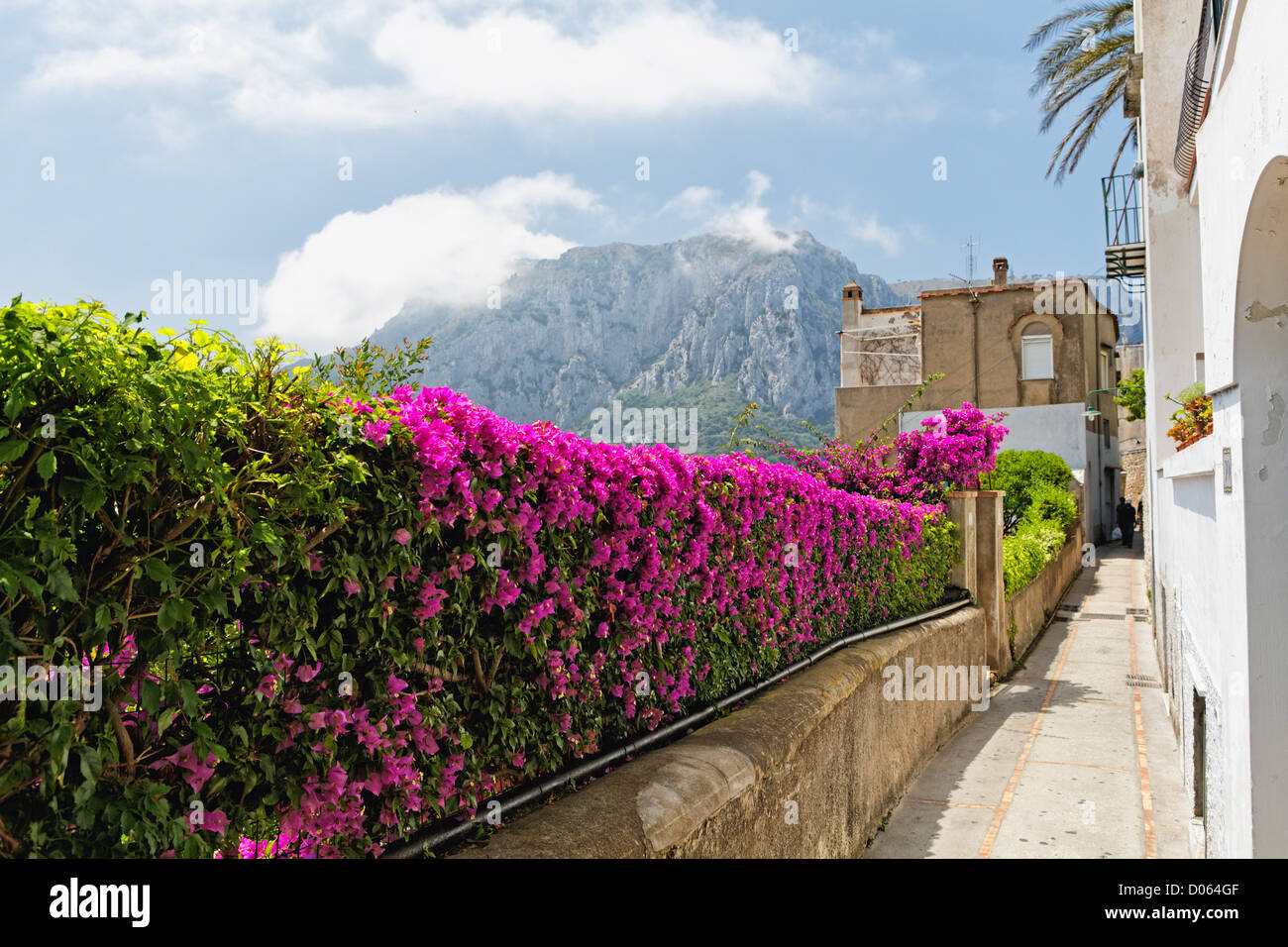 Blooming Flowers on a Fence along an Alleyway, Capri, Campania, Italy - Stock Image