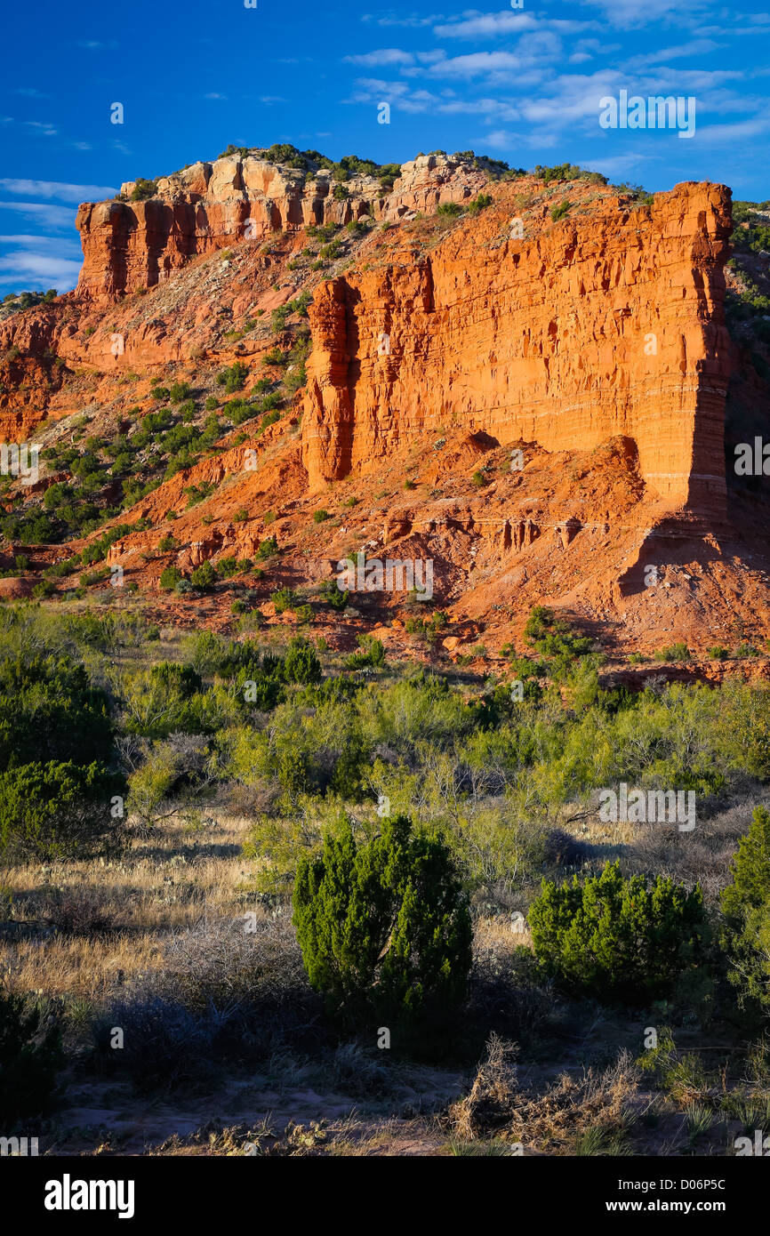 Juniper trees in the Northprong area of Caprock Canyon State Park, Texas - Stock Image