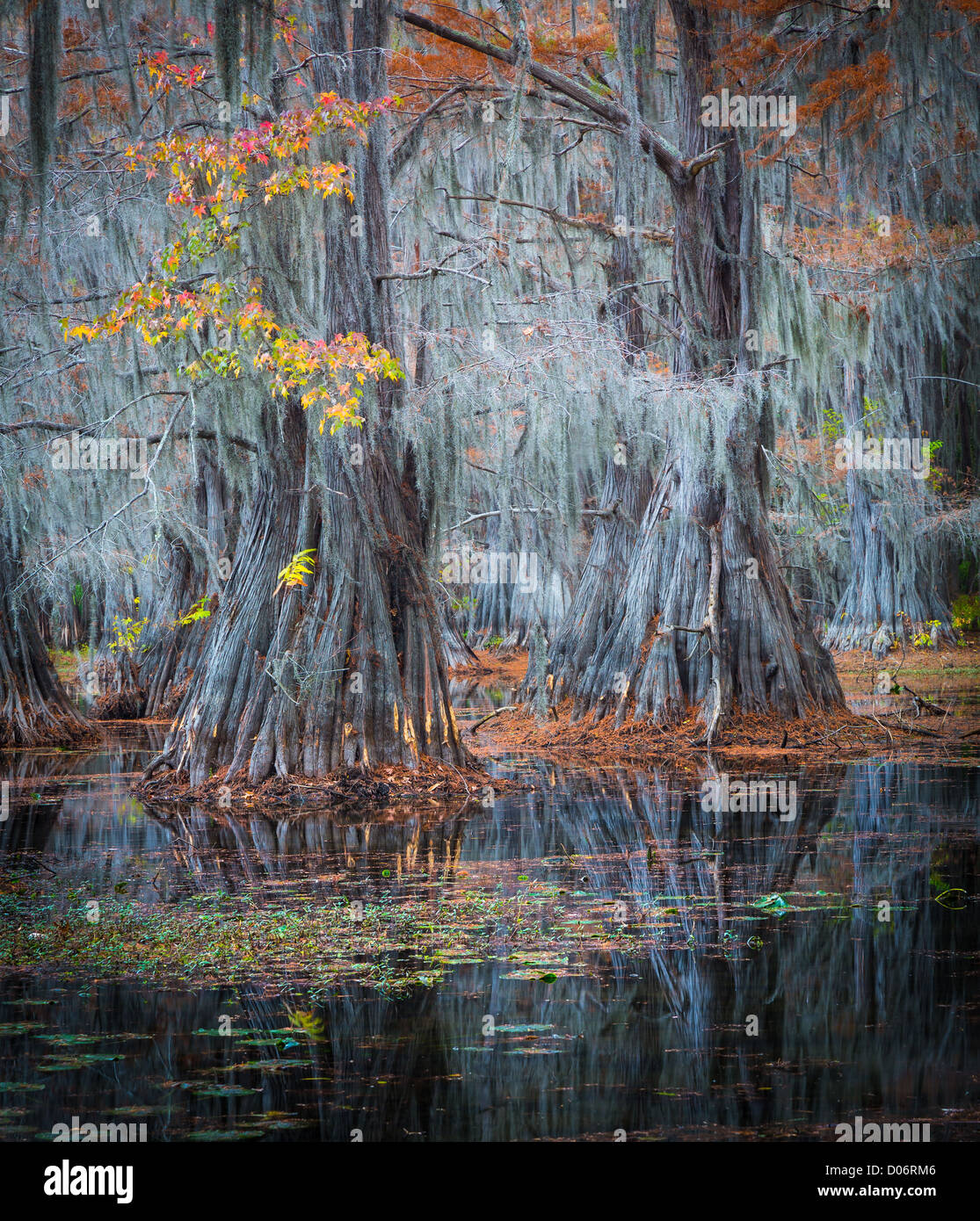 Cypress trees in fall color at Caddo Lake State Park, Texas - Stock Image