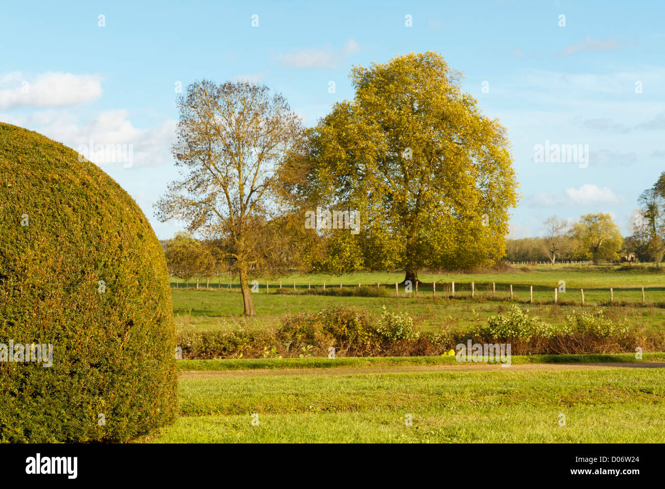 Topiary hedge in fields. - Stock Image
