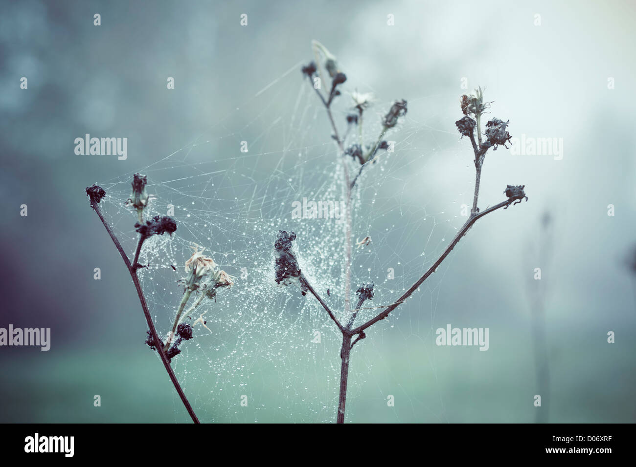 Cobweb covering plant outdoors. - Stock Image