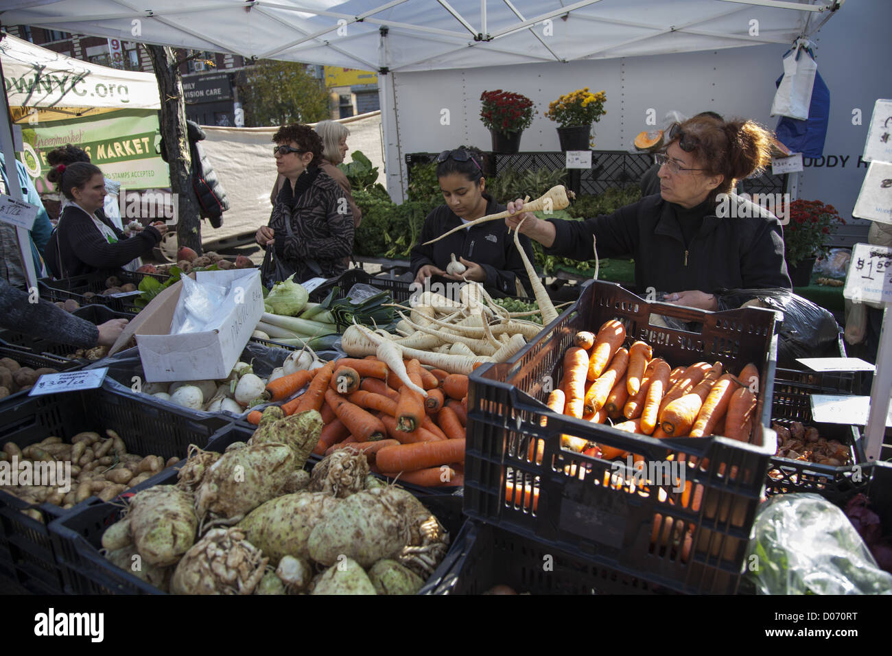 Woman checks out a parsnip one of the root vegetables at a farmers market in the Ditmas Park neighborhood of Brooklyn, - Stock Image