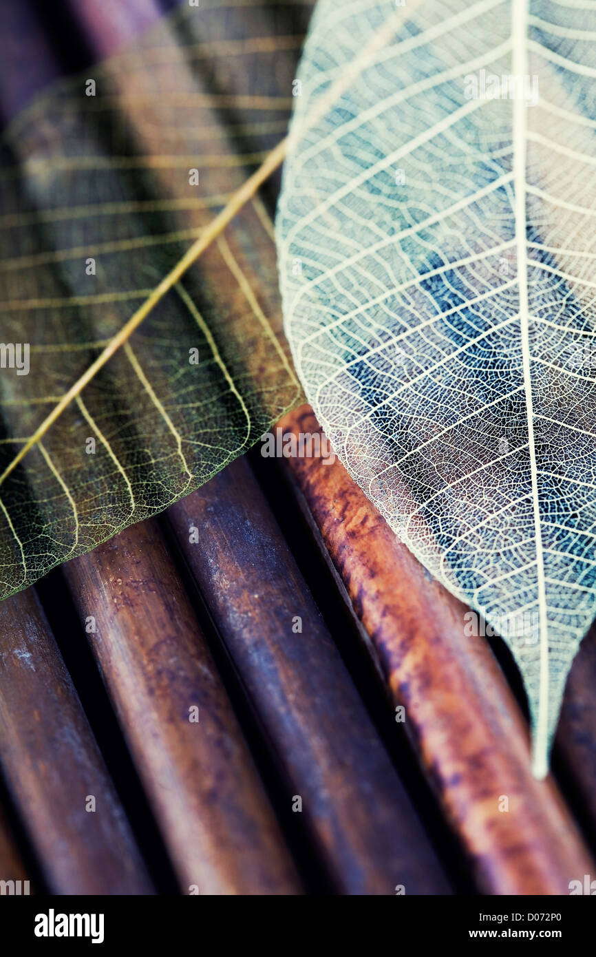 Skeleton Leaves Composition (health and beauty concept) - Stock Image