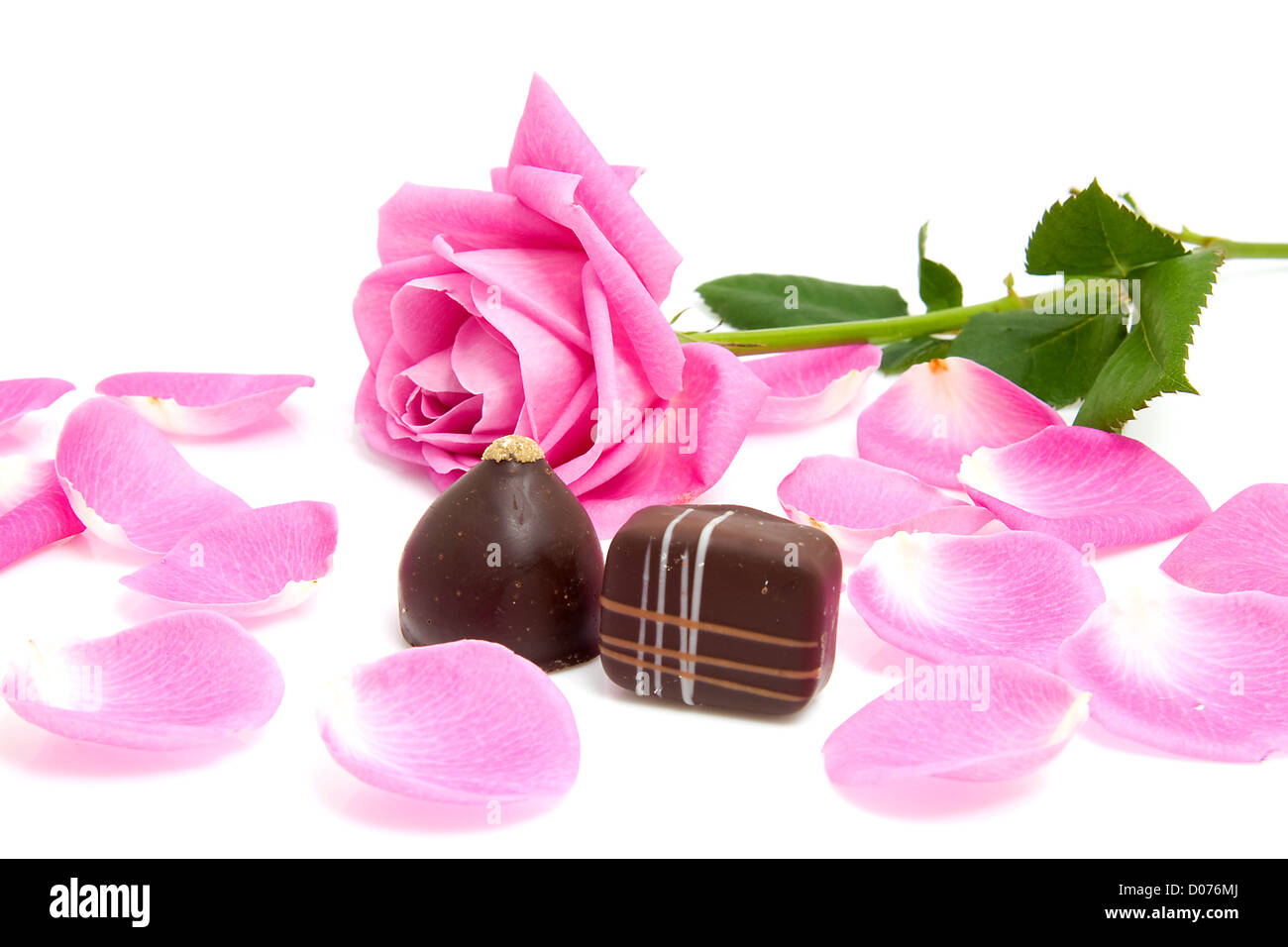 pink rose and leaves with chocolate bonbons for Valentine's day over white background - Stock Image