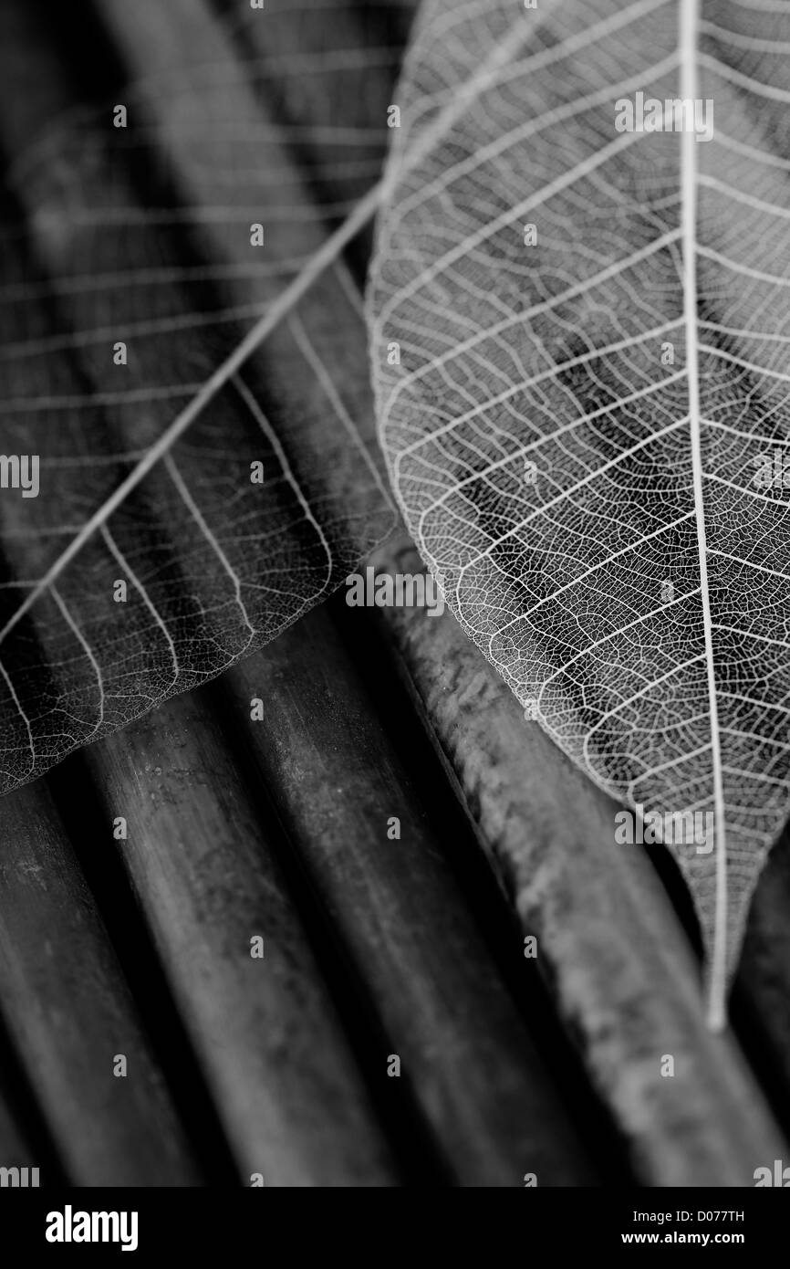Skeleton leaves composition black and white image