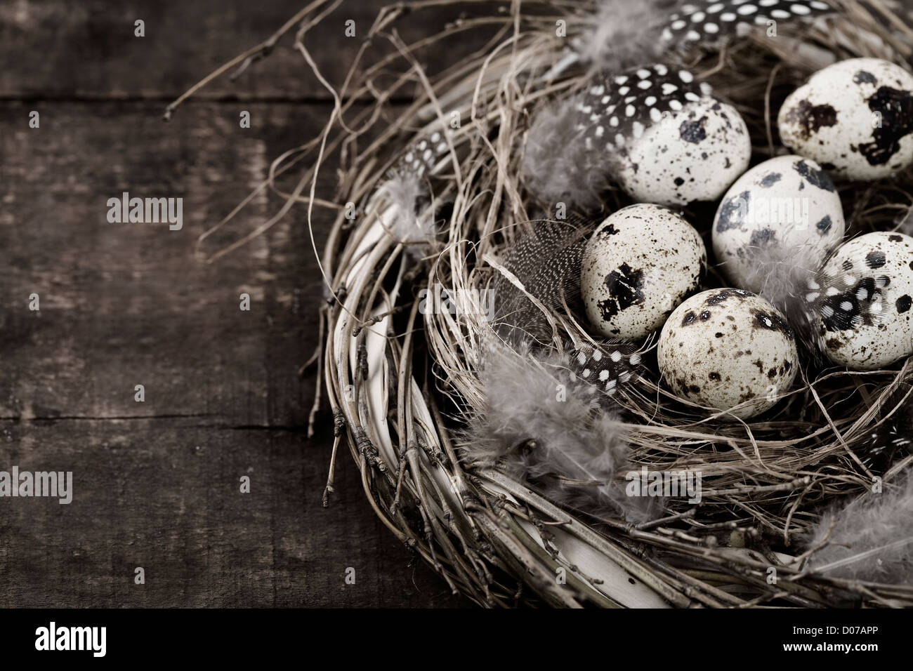 Birds nest with eggs (easter composition) - Stock Image