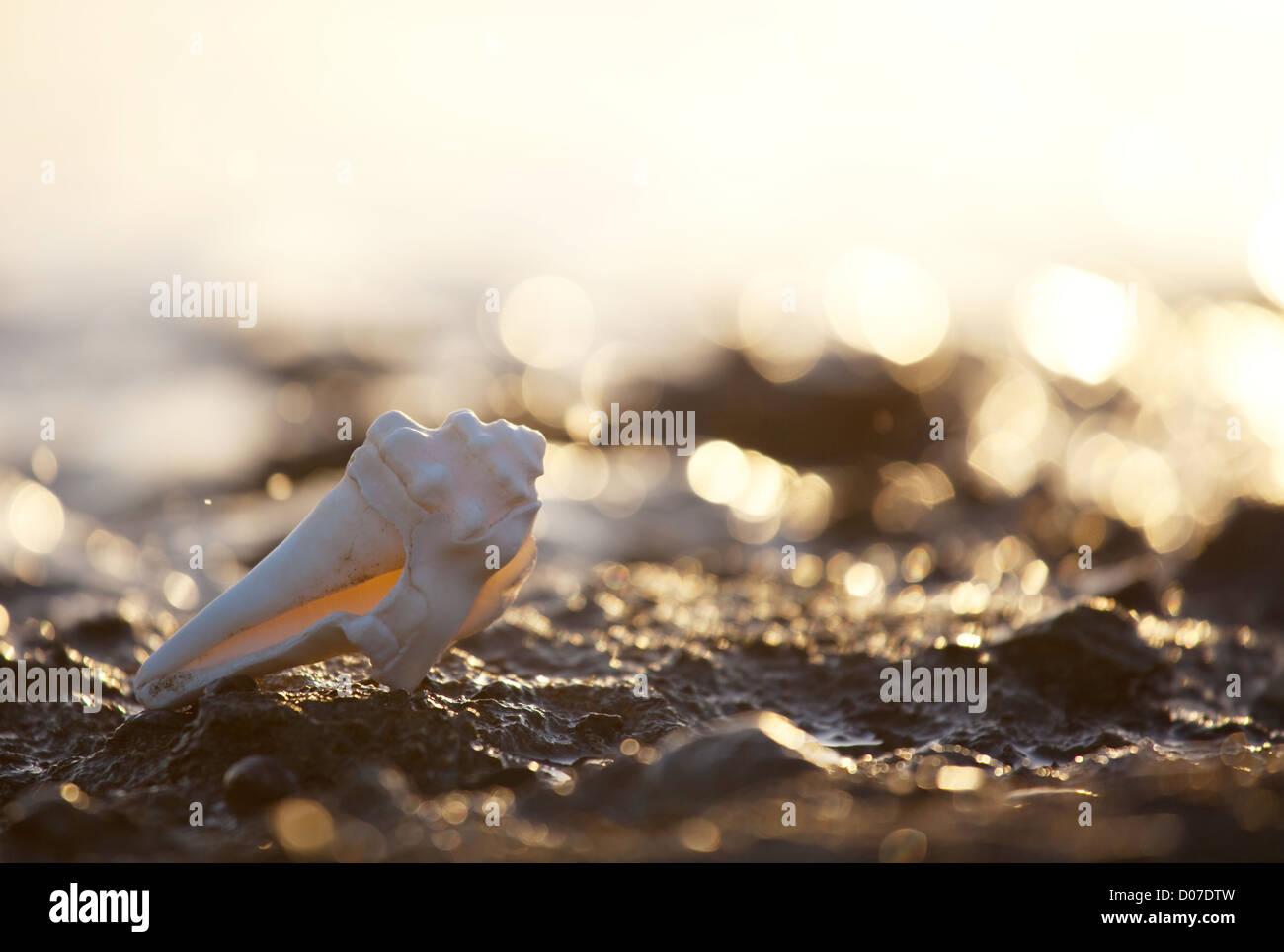 Shells - Stock Image