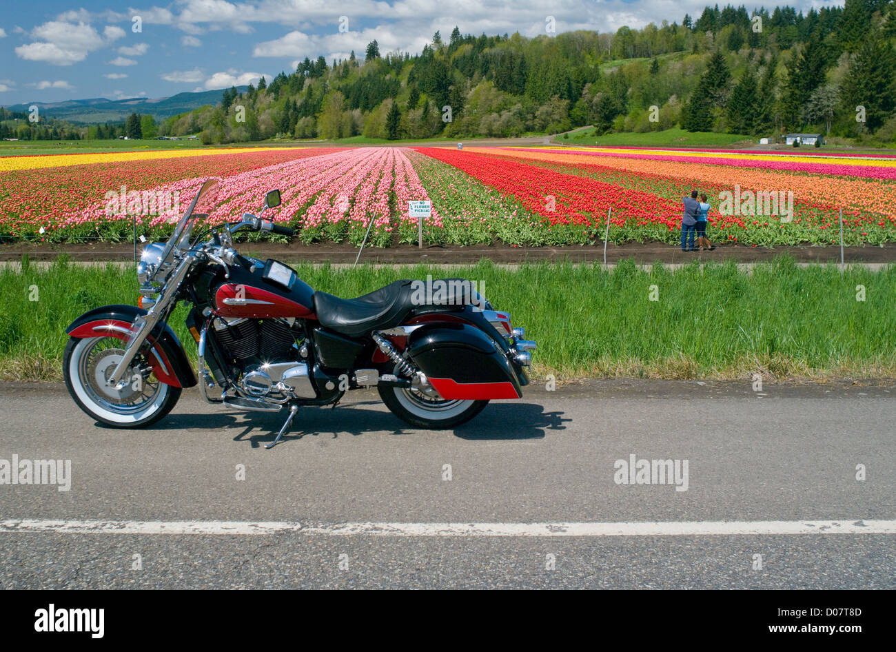 A motorcycle is parked in front of a vibrant and beautiful field of tulips, while a man and woman also enjoy the - Stock Image