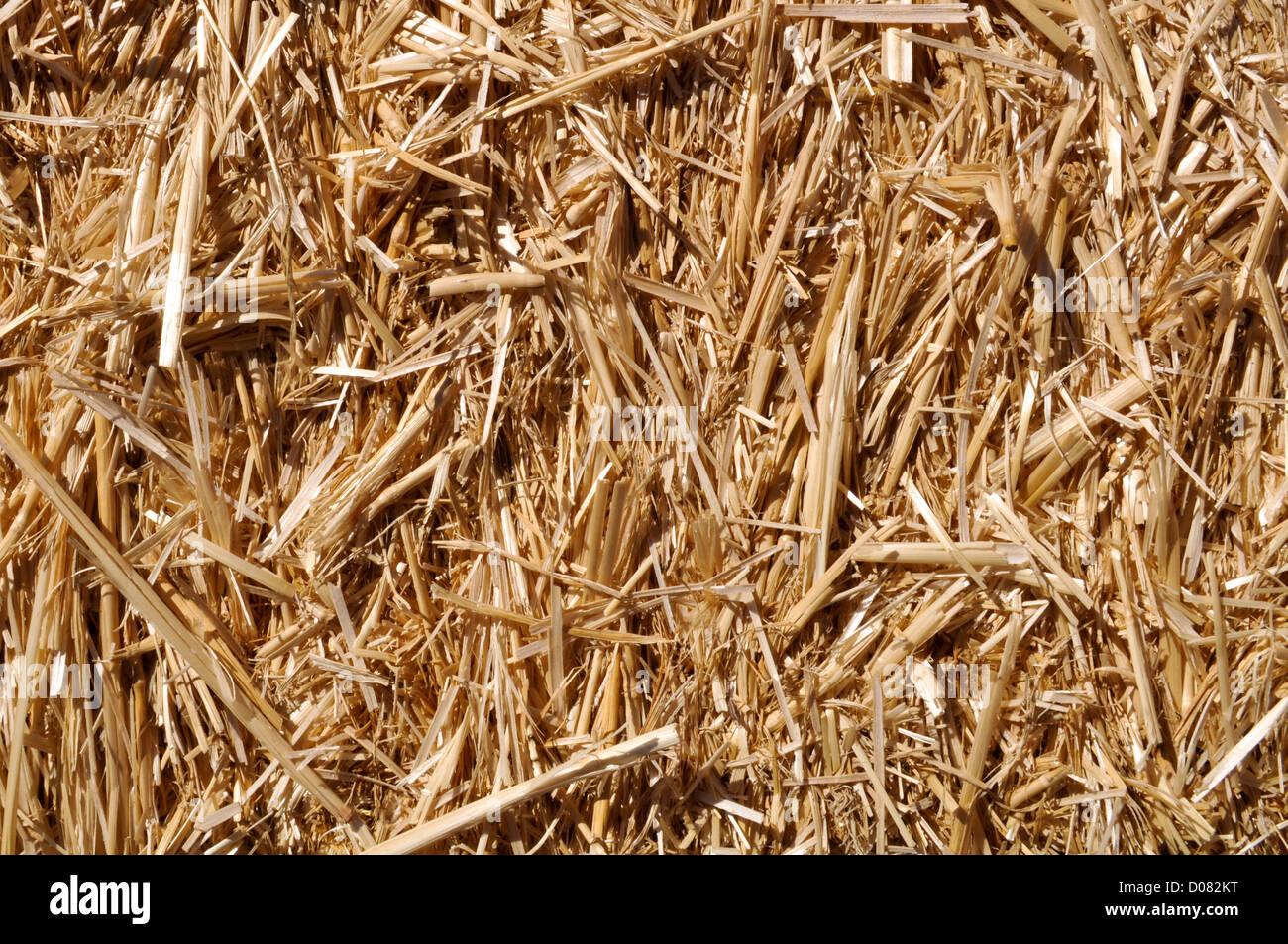 Straw Background - Stock Image