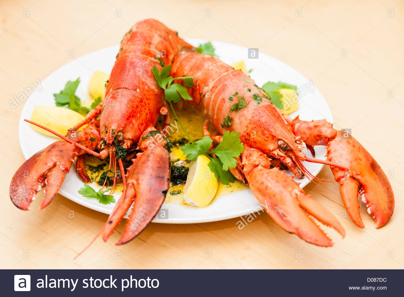 Cooked lobster dish - Stock Image
