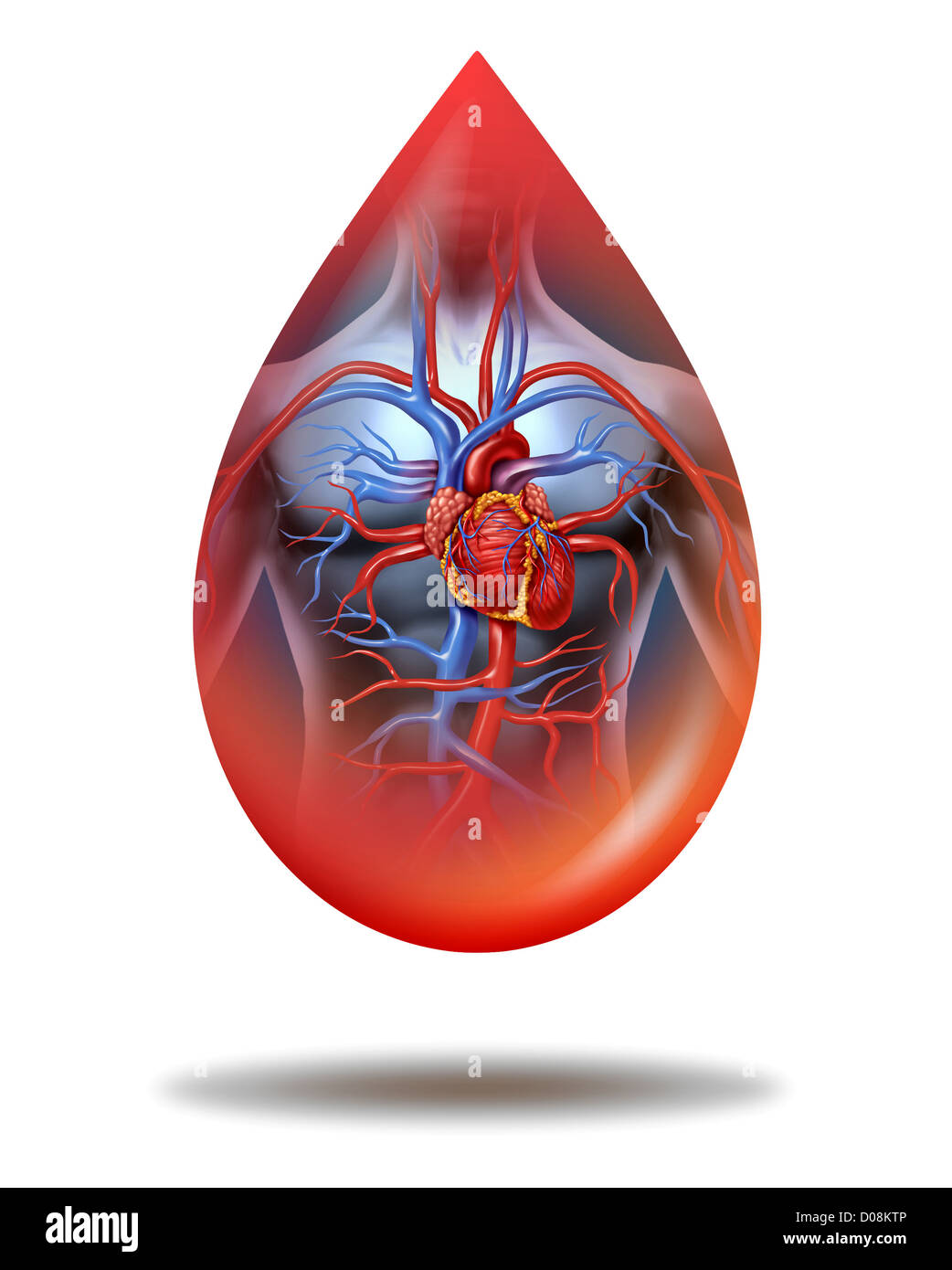 Human Heart Blood Drop With A Human Body Anatomy And Cardiovascular