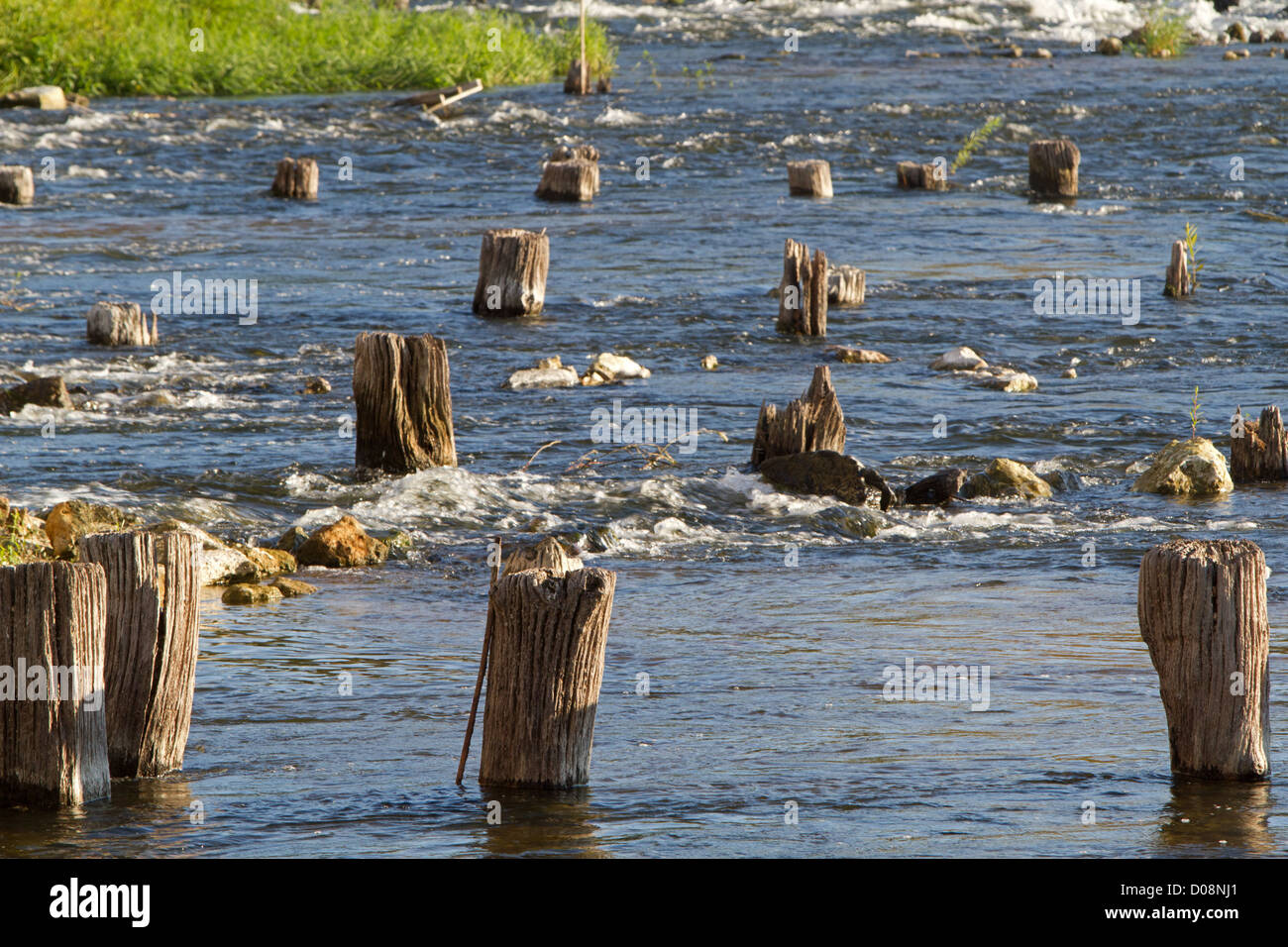 WOOD POSTS IN THE LOIRE RIVER AMBOISE INDRE-ET-LOIRE (37) FRANCE - Stock Image