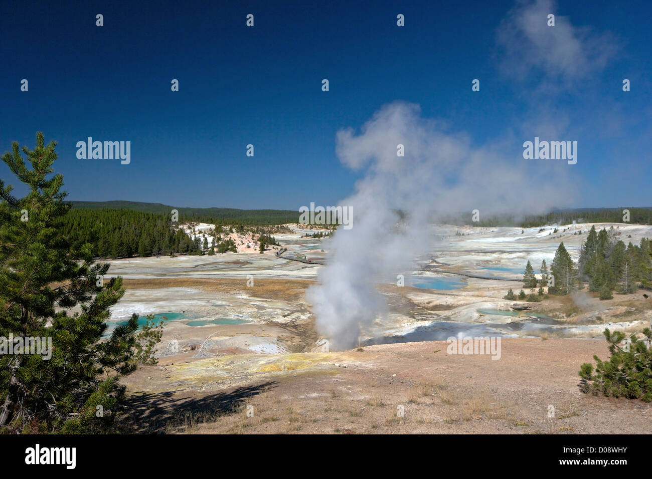 Black Growler Steam Vent in Porcelain Basin, Norris Geyser Basin, Yellowstone National Park, Wyoming, USA - Stock Image
