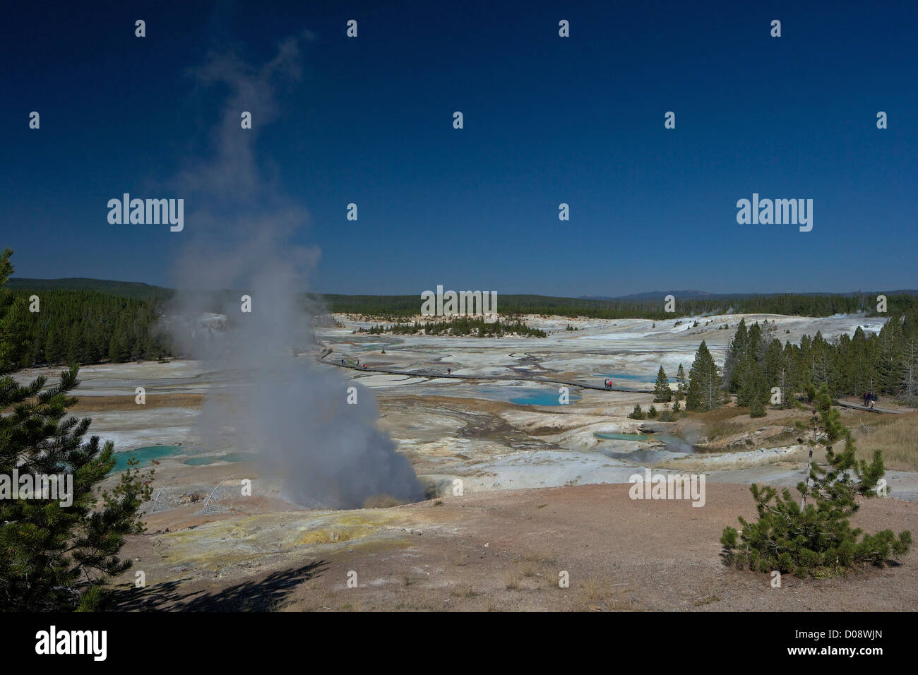 Black Growler Steam Vent in Porcelain Basin, Norris Geyser Basin, Yellowstone National Park, Wyoming, USA Stock Photo