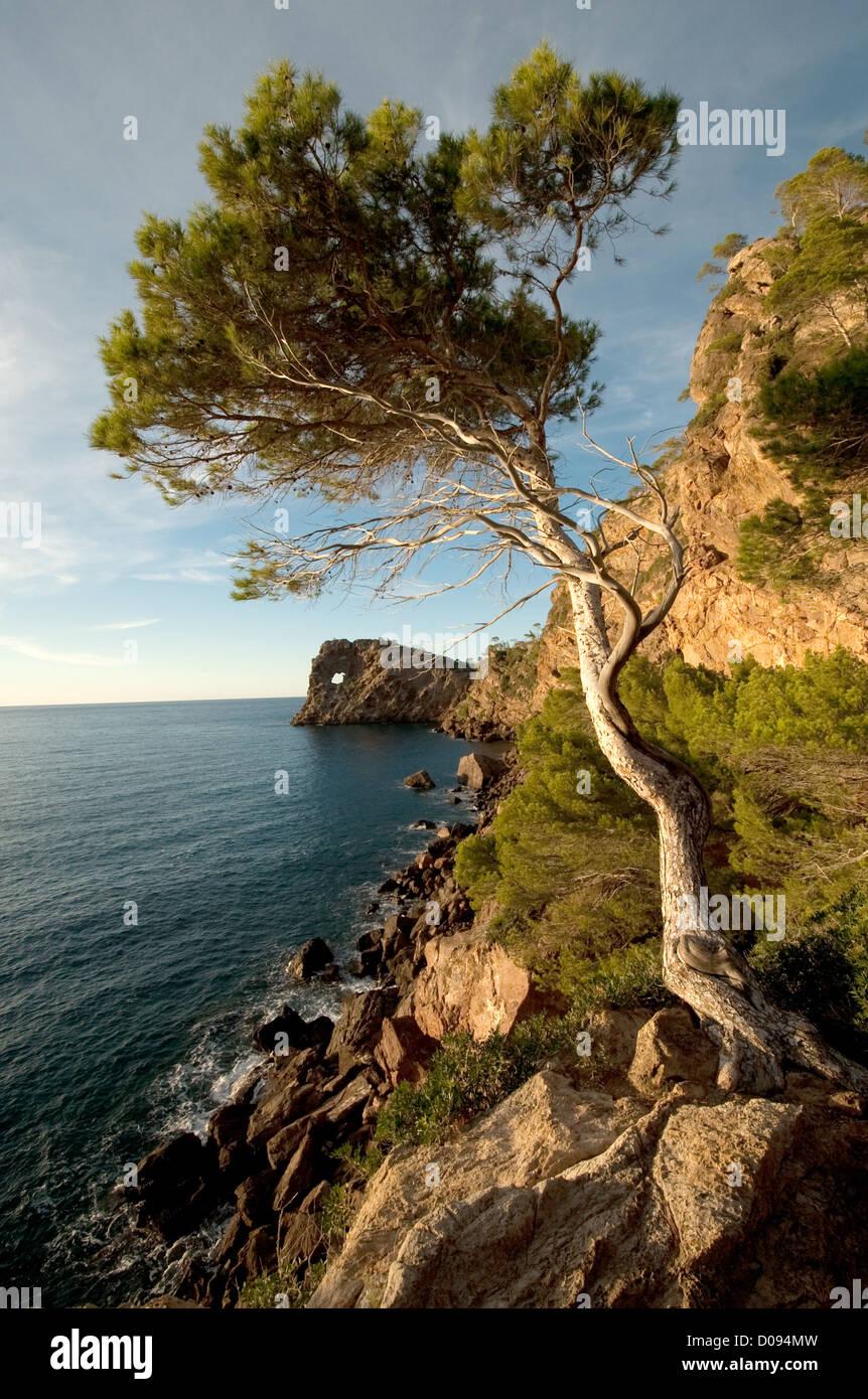 peninsula sa foradada underneath son marroig, mallorca,spain - Stock Image
