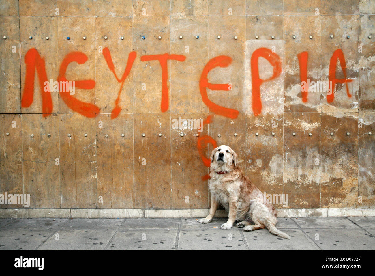 Thessaloniki, Greece. November 19, 2012. A dog sits in front of a graffiti that reads Freedom, in Thessaloniki's - Stock Image