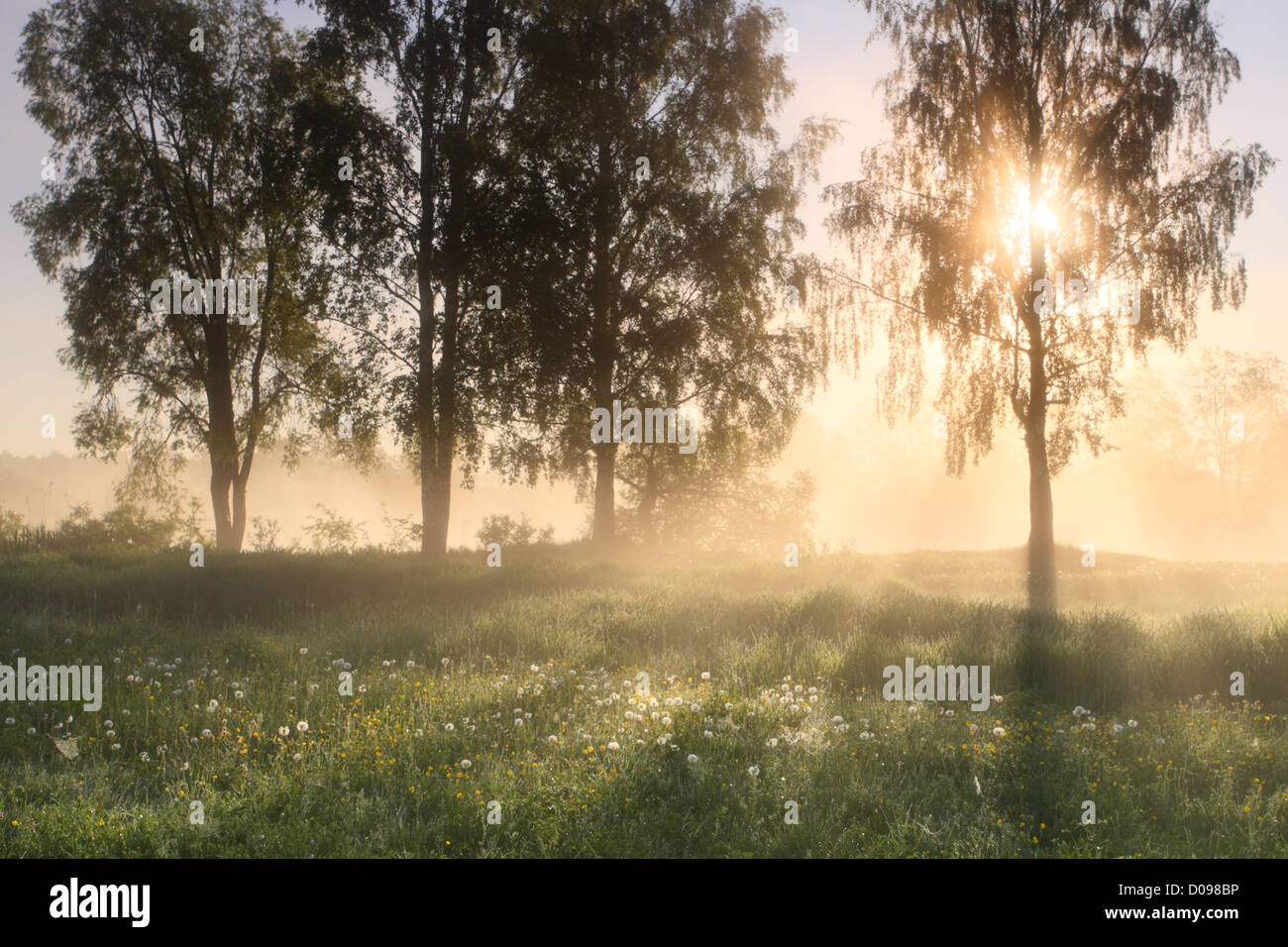Golden morning at Floodplain, Estonia, Europe - Stock Image