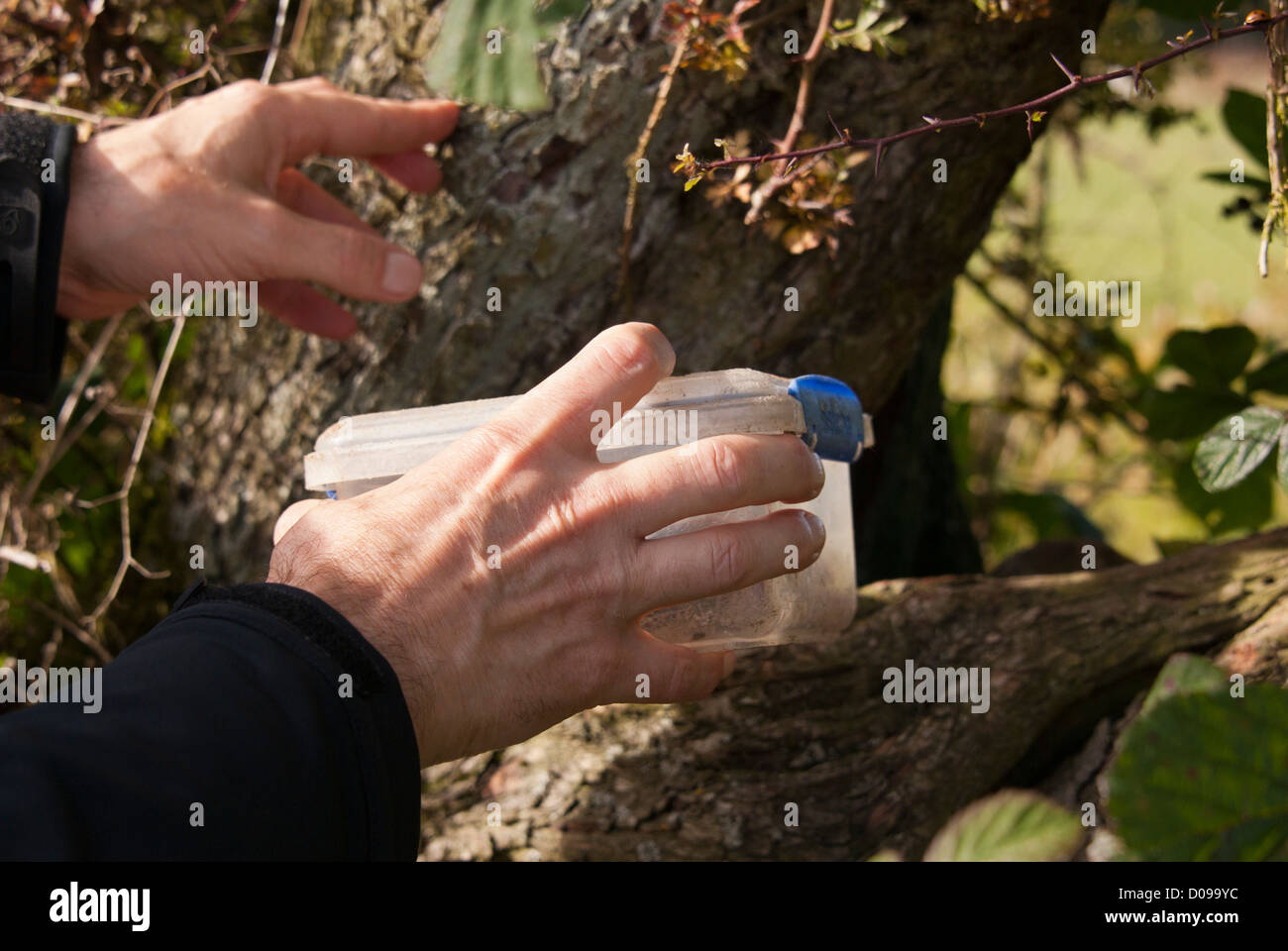 Finding a geocache box, Sheffield, South Yorkshire, England. Stock Photo