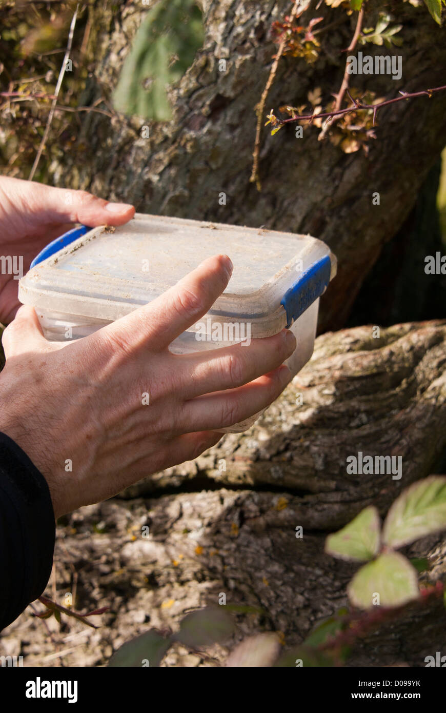Finding a geocache box, Sheffield, South Yorkshire, England. - Stock Image