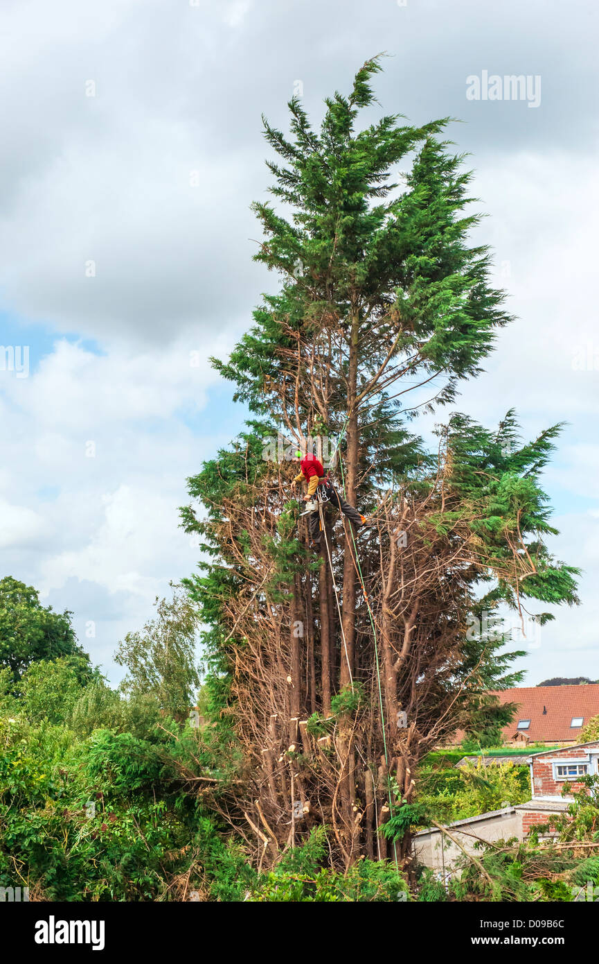 Tree trimmer working, Belgium Stock Photo