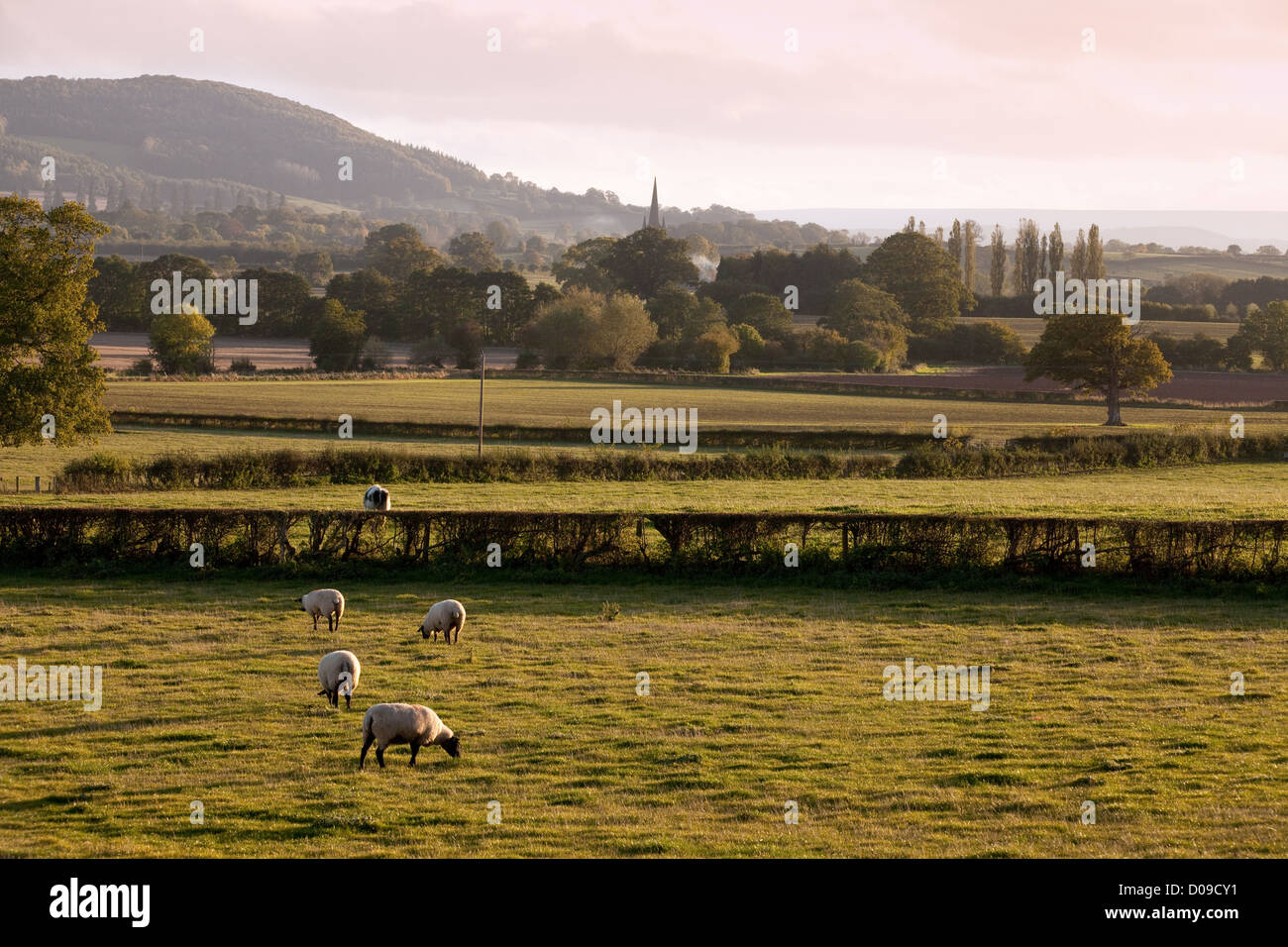 Shropshire countryside, south Shropshire England UK - Stock Image