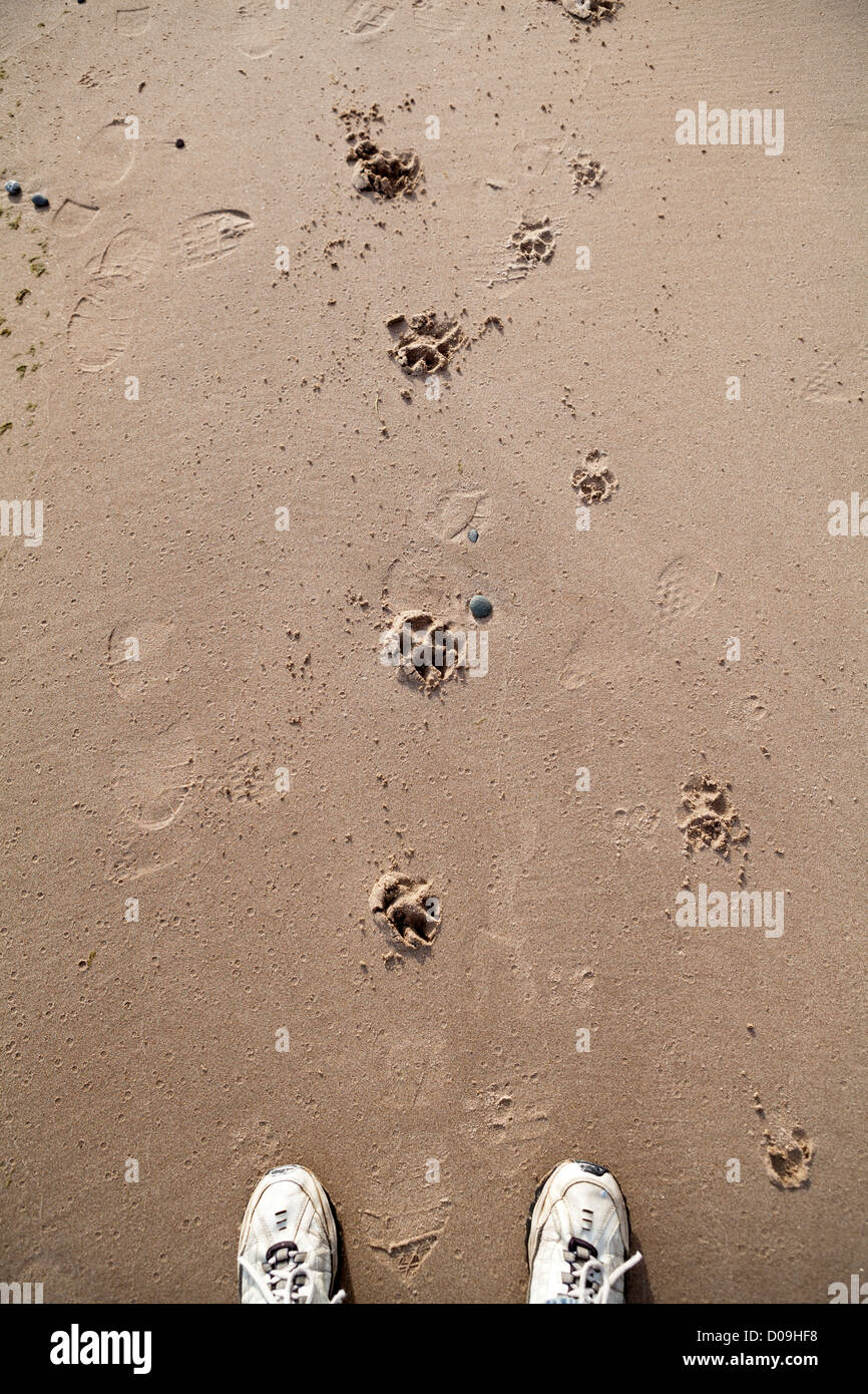 A dog's paw prints are visible in the sand. - Stock Image