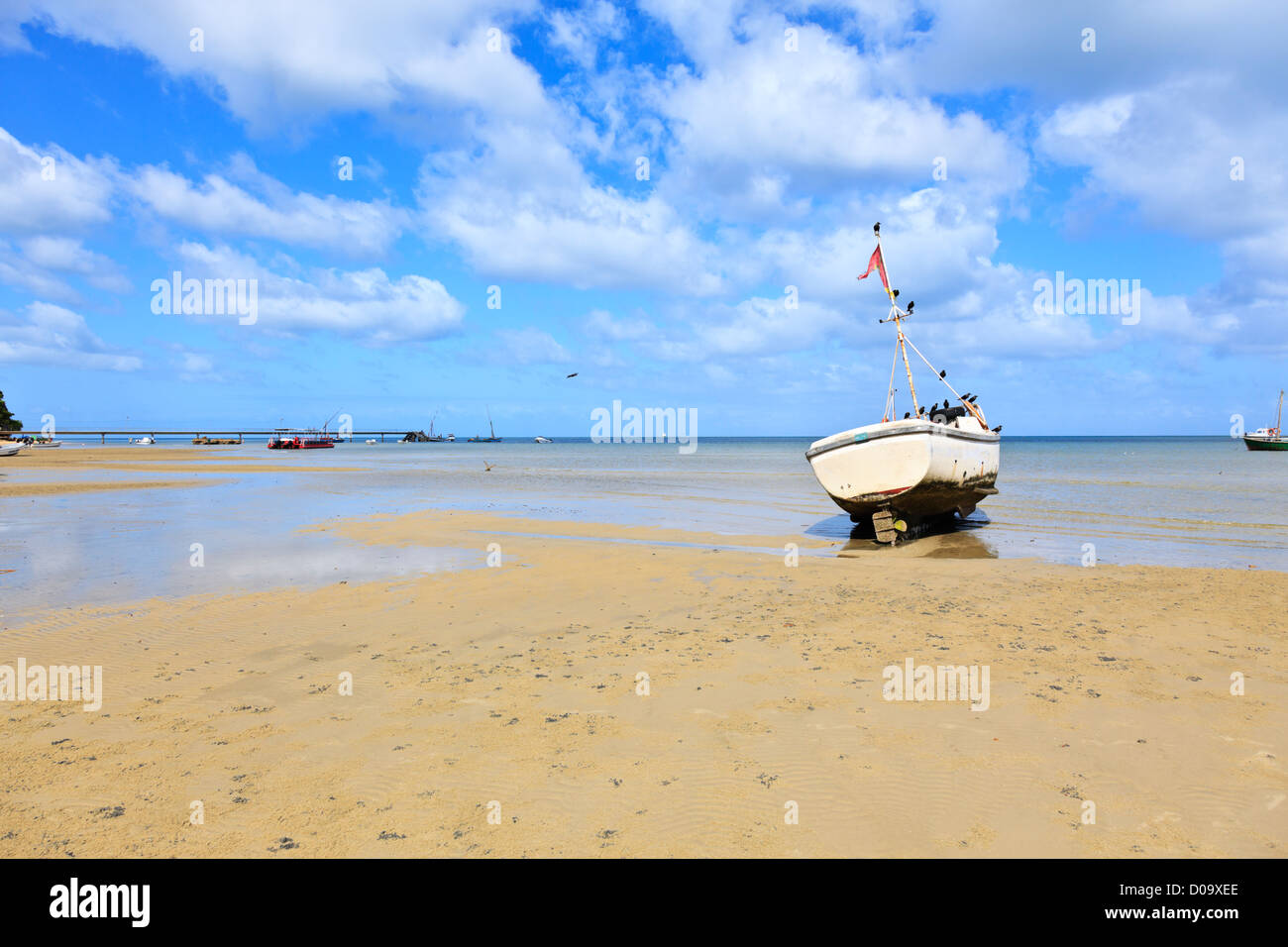 A flock of crows perching on a fishing boat stranded at low tide. Inhaca Island Mozambique Stock Photo