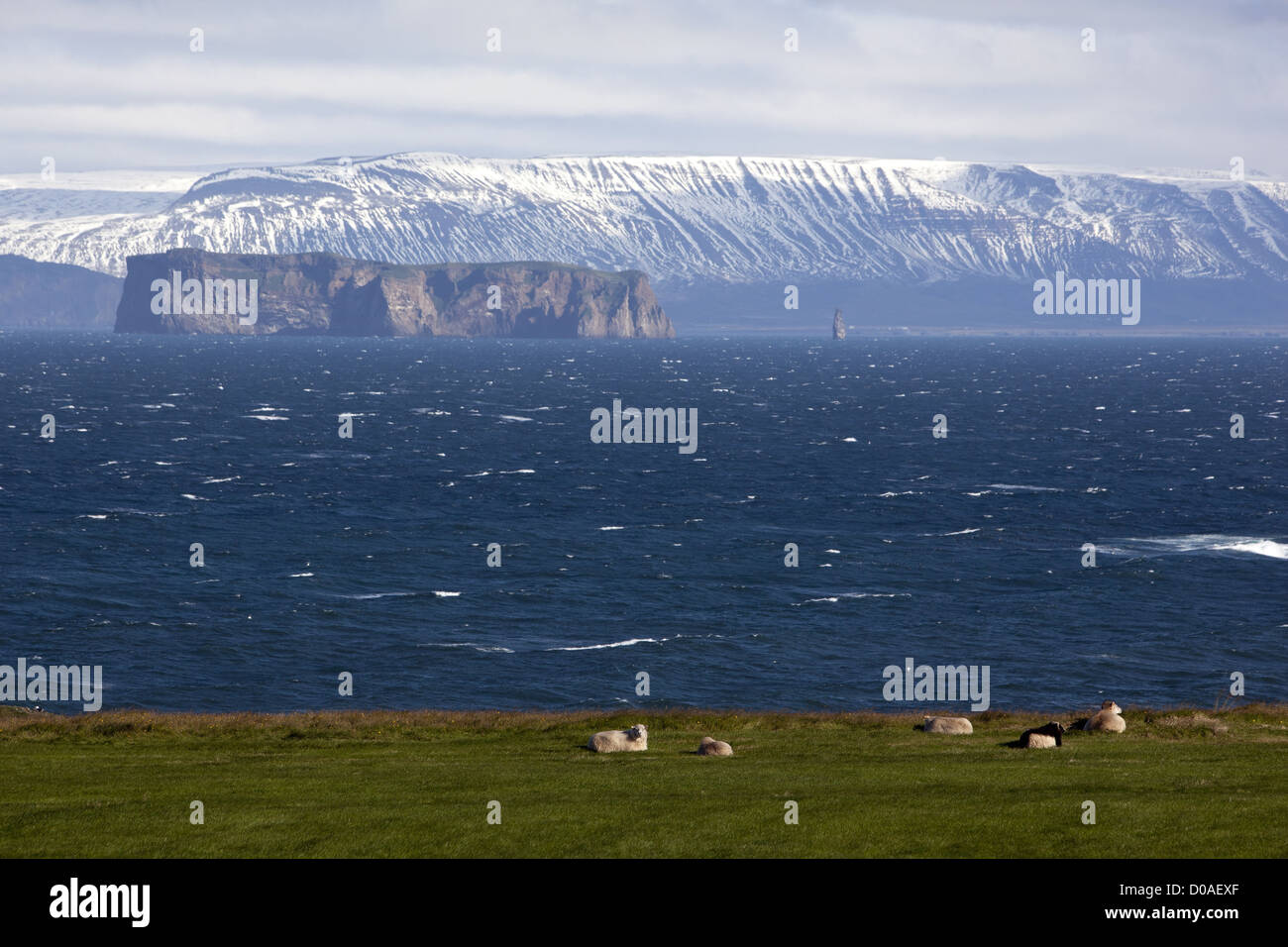 PASTURELAND FOR ICELANDIC SHEEP ON A BANK OF THE SKAGAFJORDUR FJORD IN THE NORTH OF ICELAND EUROPE - Stock Image
