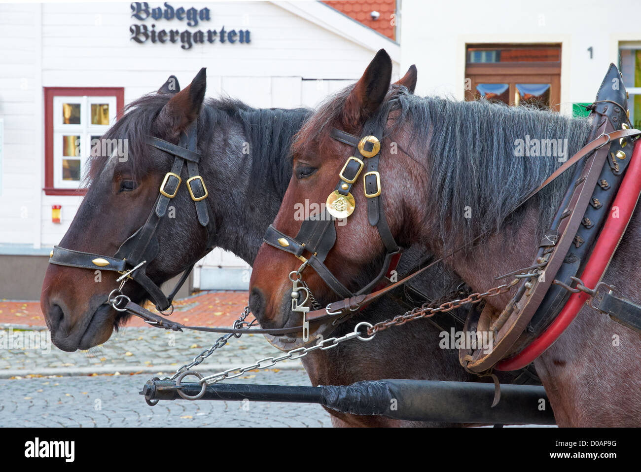 Wernigerode, Sachsen-Anhalt, Germany. Horses harnessed to bus providing tours of the town. Pferde-Bus fur stadt - Stock Image