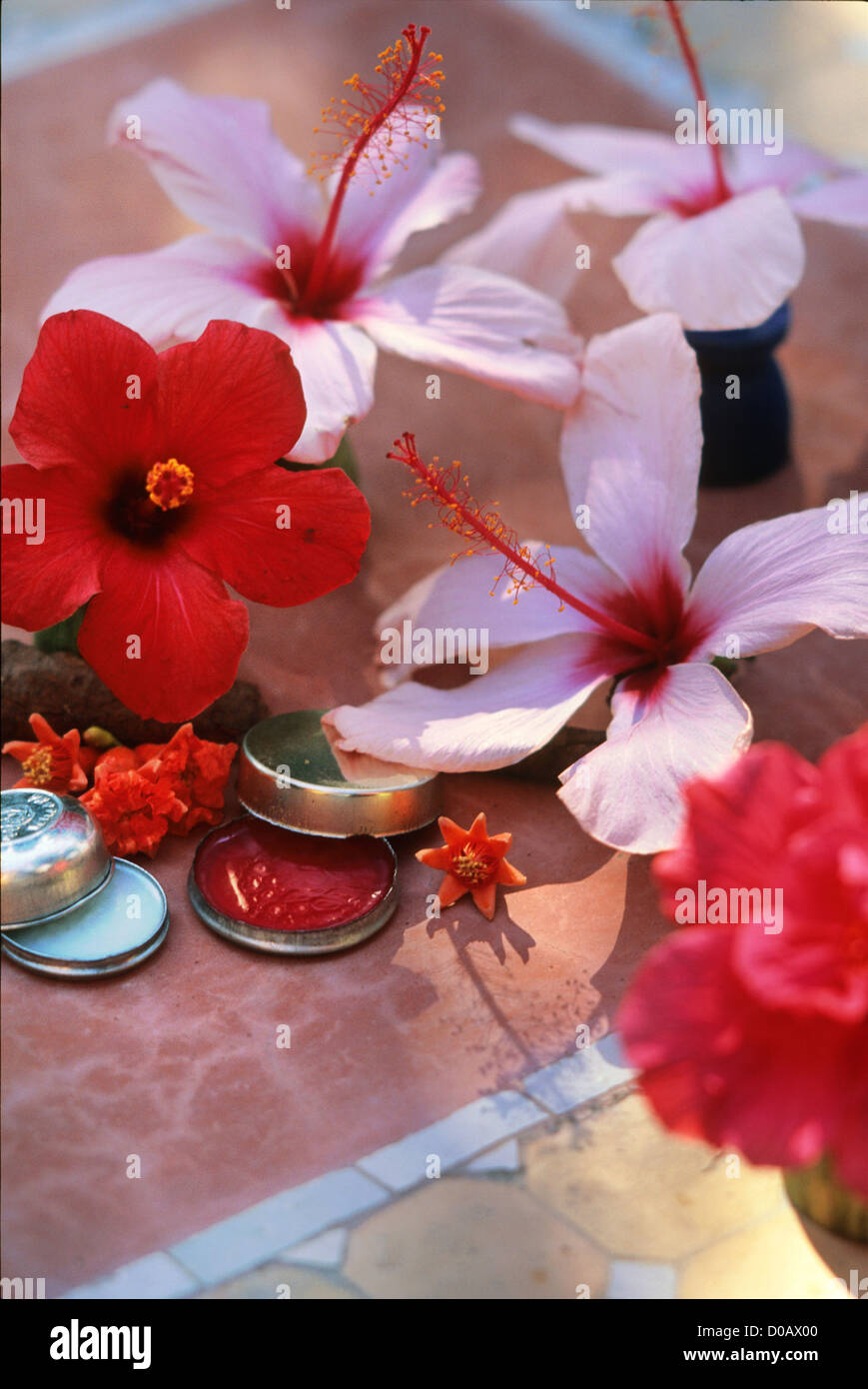 Hibiscus flowers used in north african cosmetics notably the creams hibiscus flowers used in north african cosmetics notably the creams and lip care traditional body care marrakech morocco africa izmirmasajfo