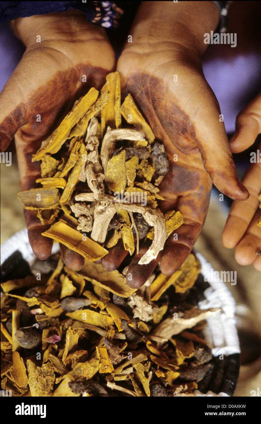 OUD WOOD SHAVINGS MIXED WITH DRIED PLANTS AND USED IN INCENSE M'HAMID MOROCCO AFRICA - Stock Image