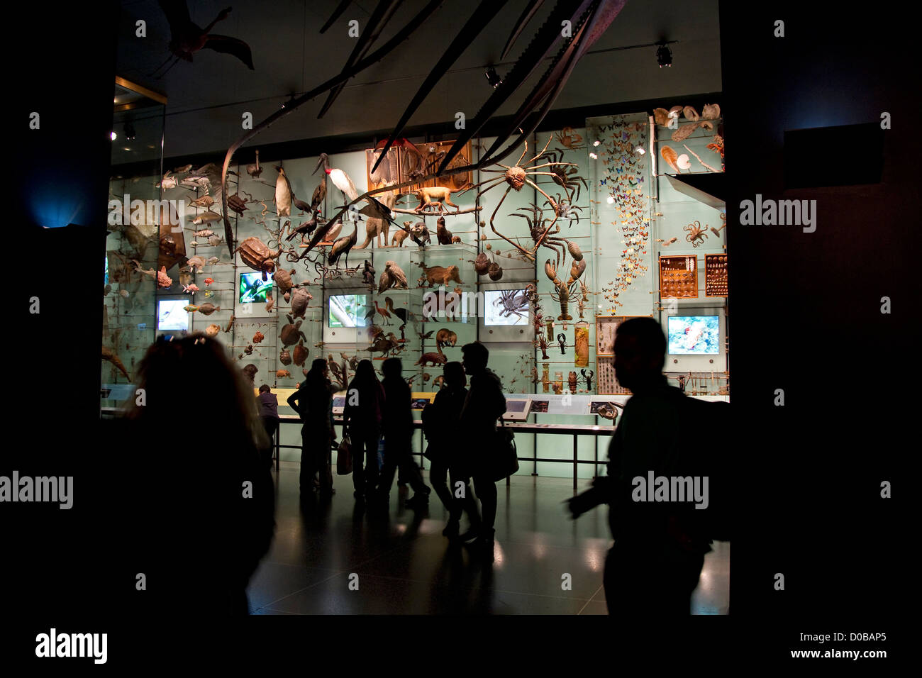 Visitors to the American Museum of Natural History view natural history exhibit display, New York City, NYC, US - Stock Image